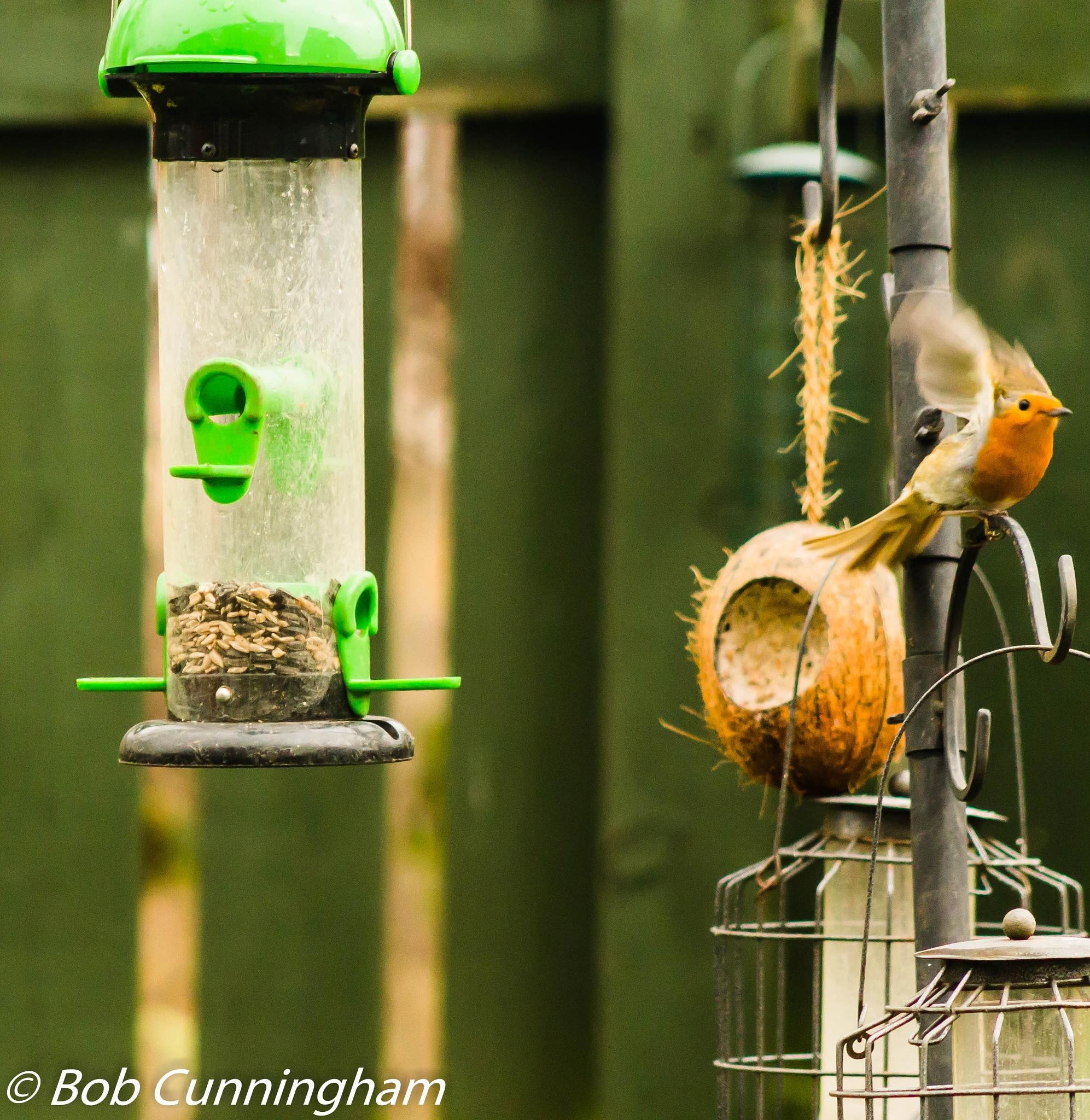 Robin by bob.cunningham.56884