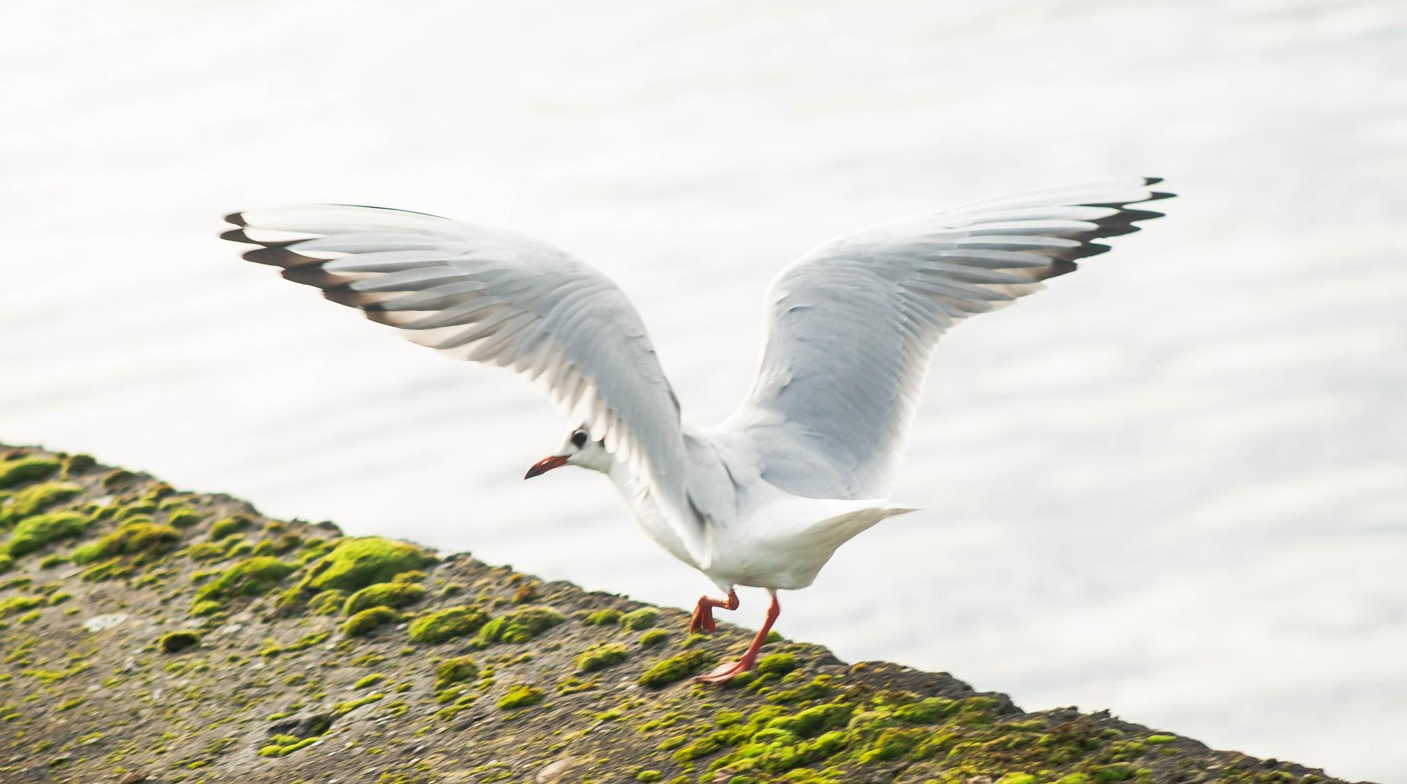 Gull by bob.cunningham.56884