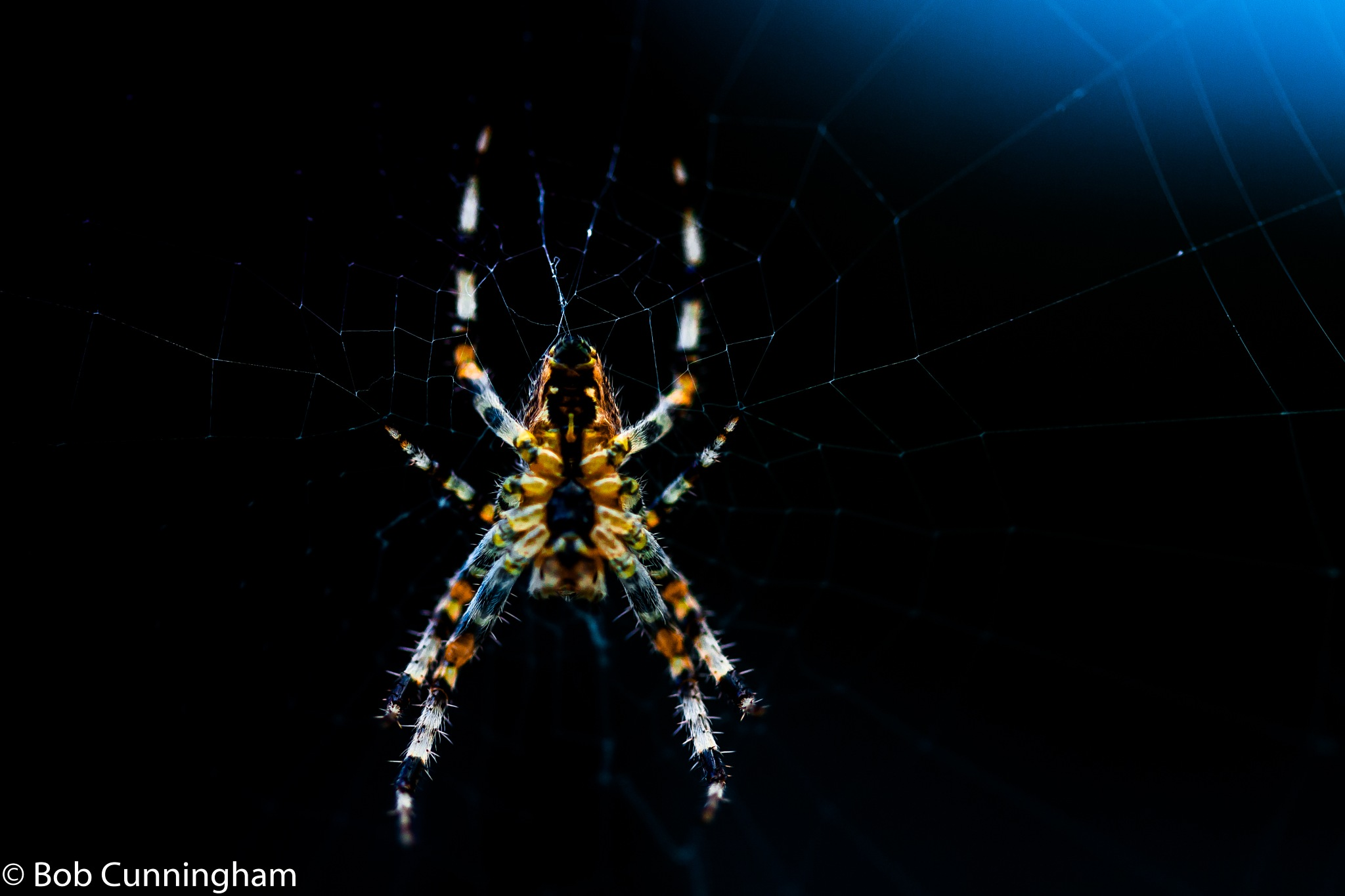 Spider by bob.cunningham.56884