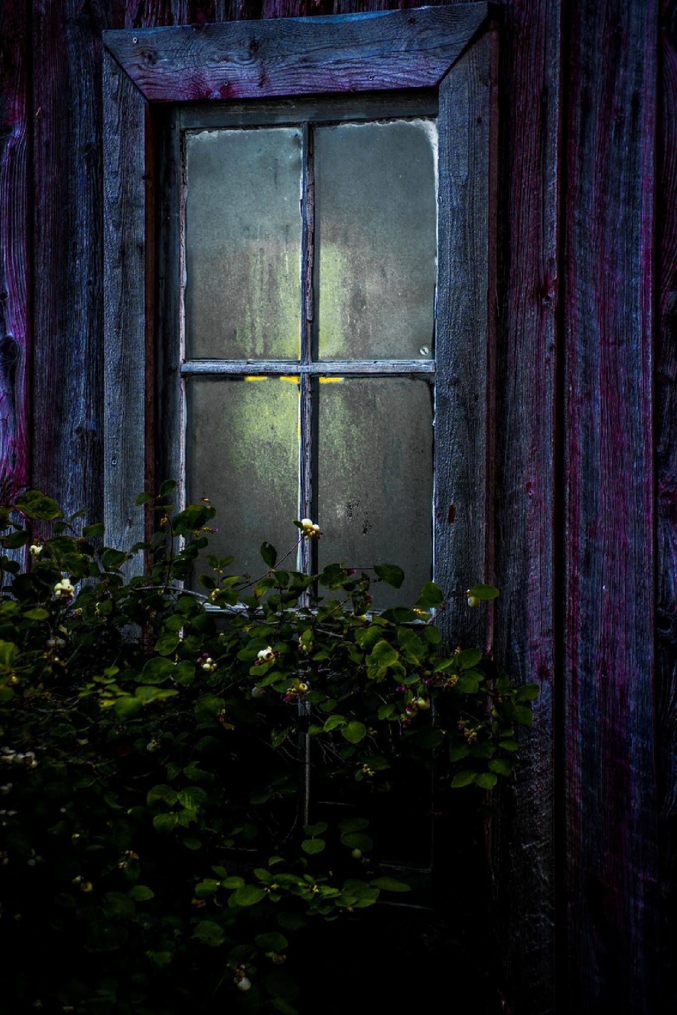 Forgotten windows by Jane.lindbladh