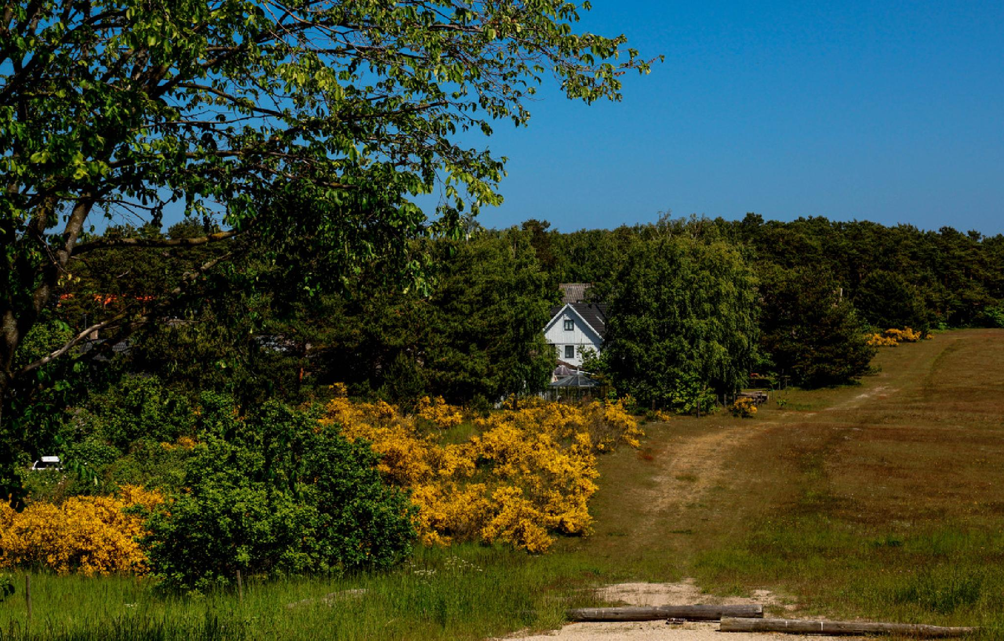 House between the trees by Jane.lindbladh