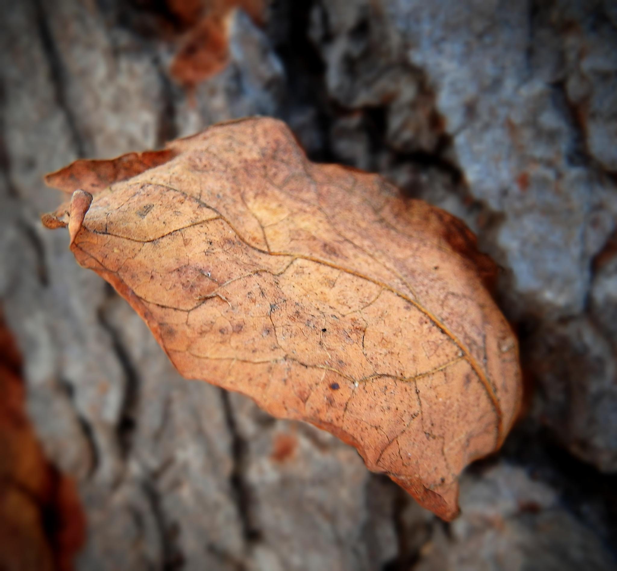 Fall Leaf Stuck On A Tree by Darlene Eastin