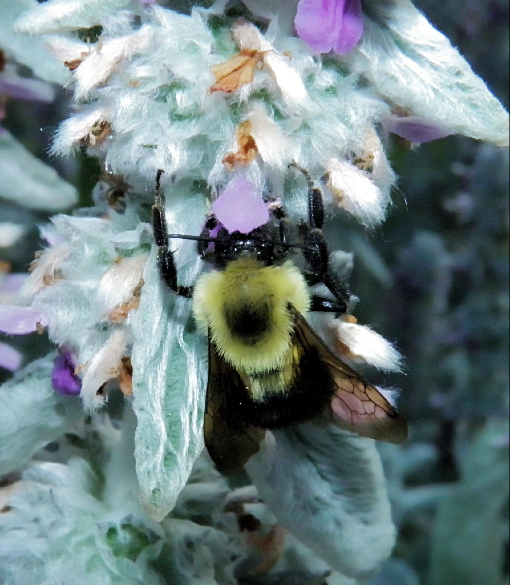Bumble Bee... by Darlene Eastin