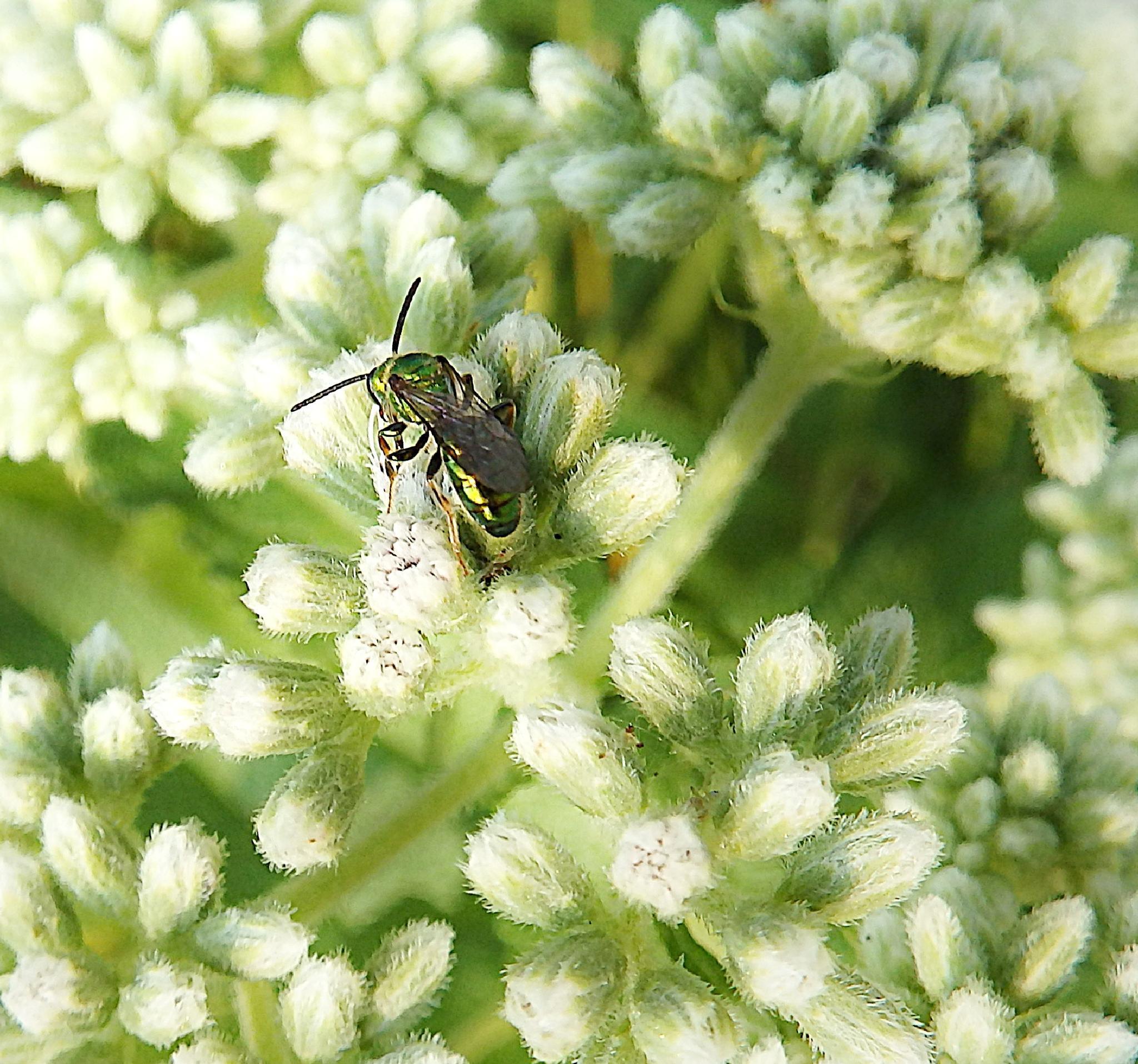 Wildflower Buds by Darlene Eastin