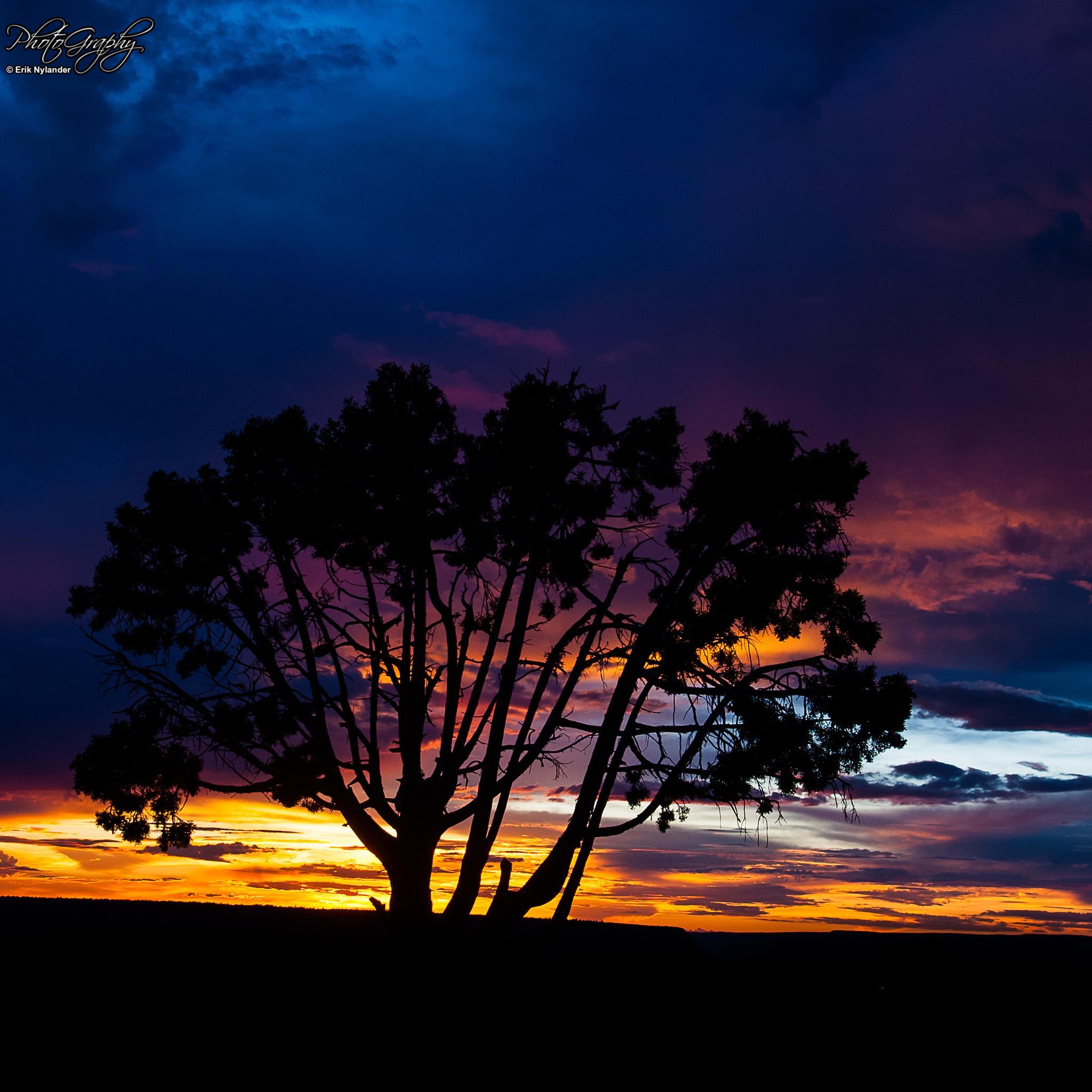 Tree by Erik Nylander