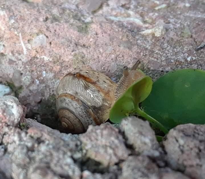 snail by sheri.larkin.3