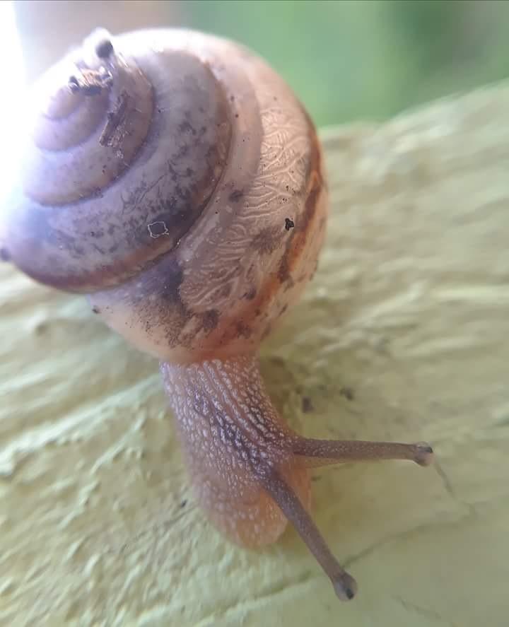 snail3 by sheri.larkin.3