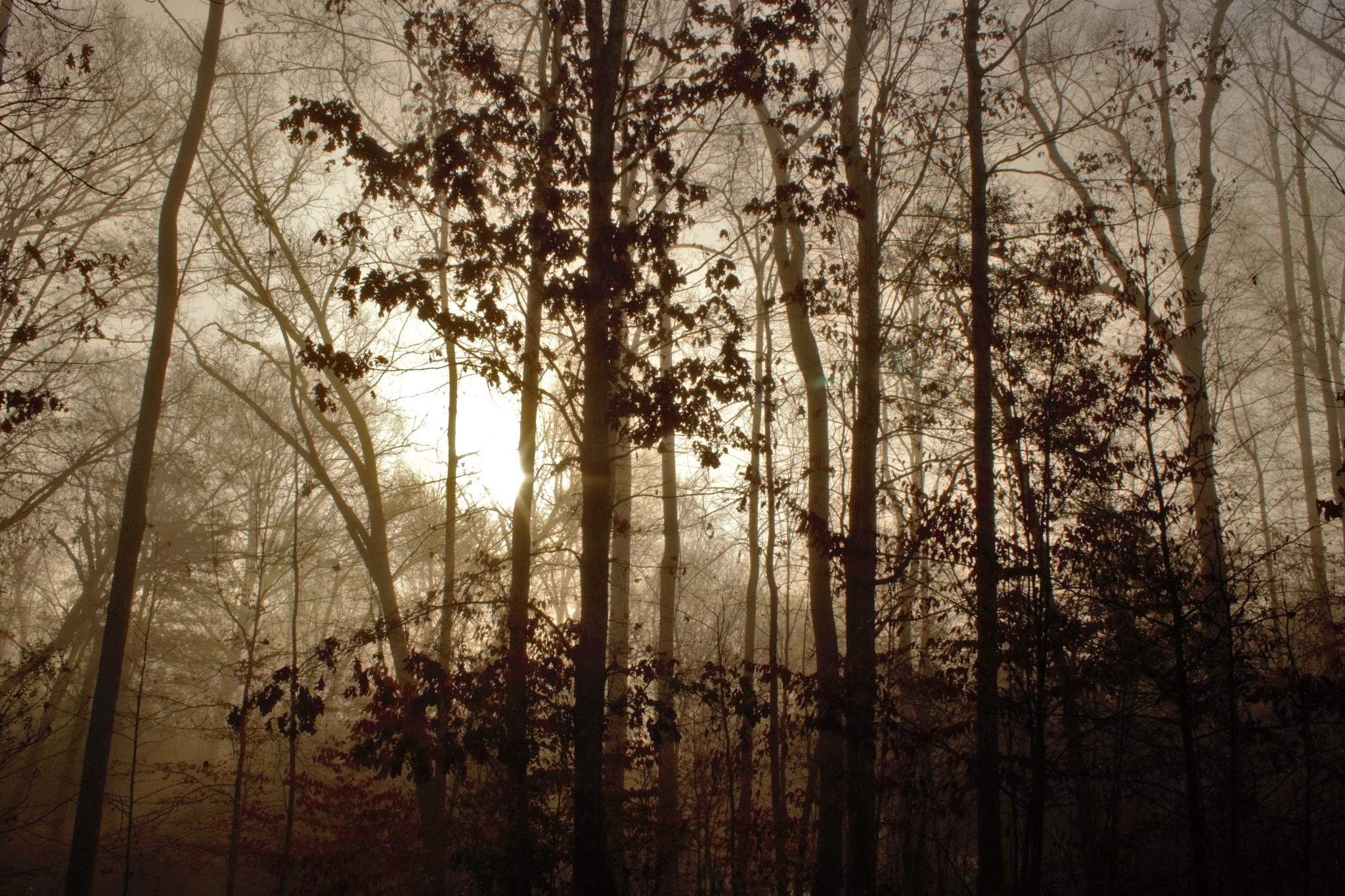 A foggy sunrise by heavenbound2