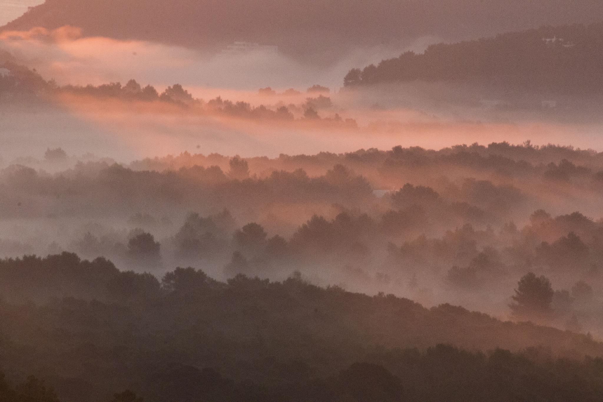 niebla en rosa by carmenvich