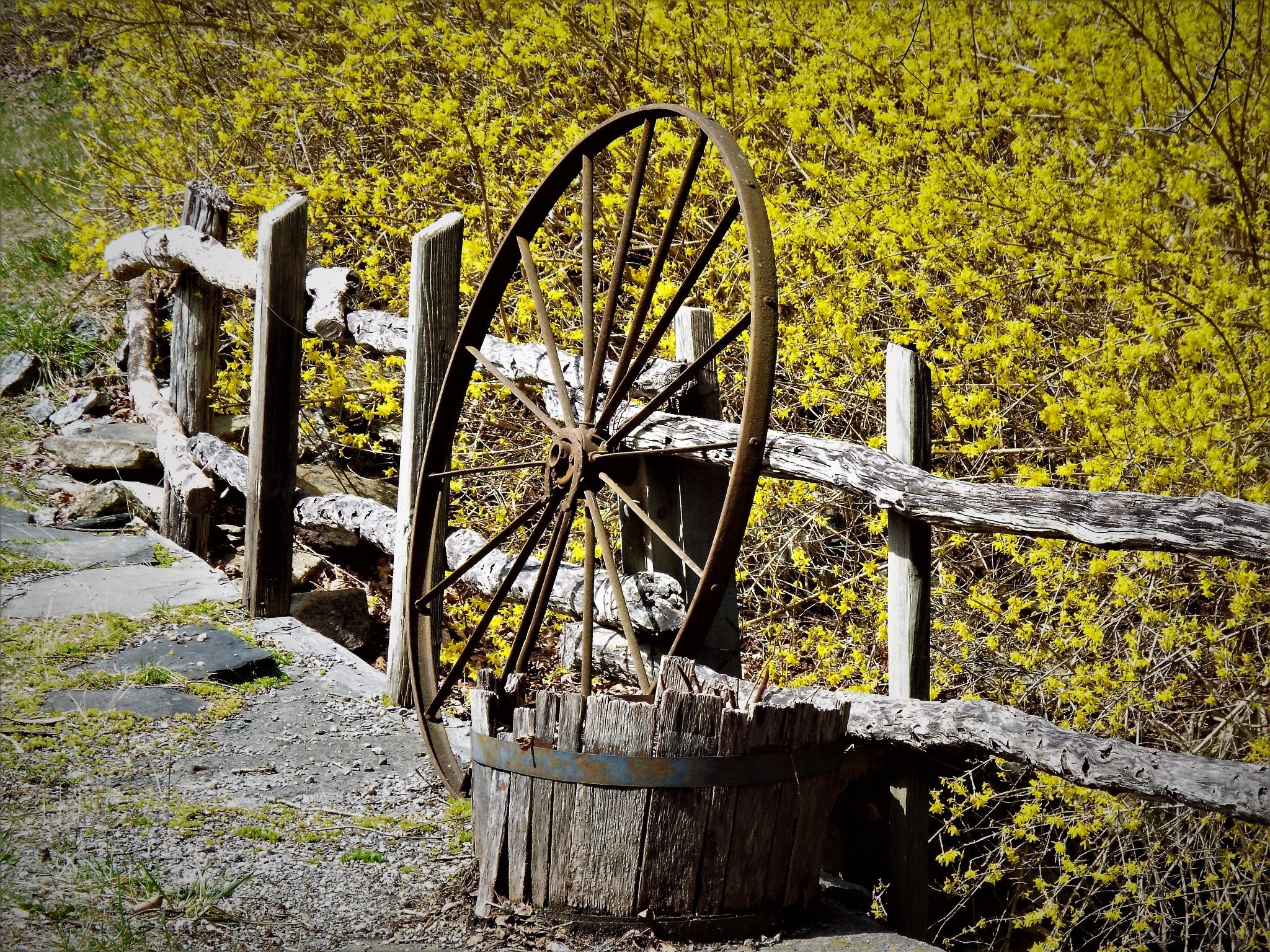Springtime by jandtwilley