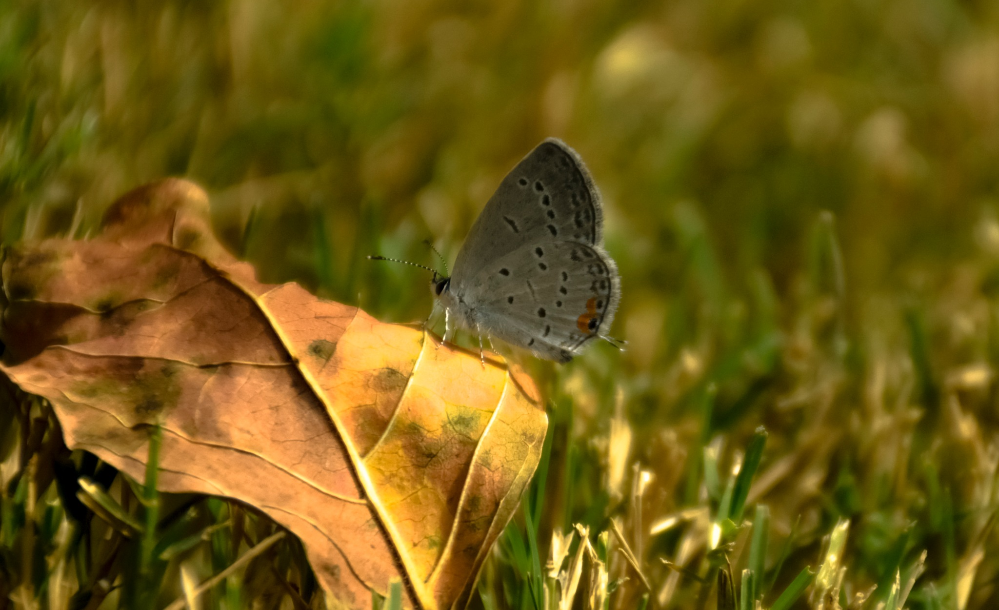 Enjoying the Sunshine On A Fall Leaf!  :) by kathy.herriottmeyers