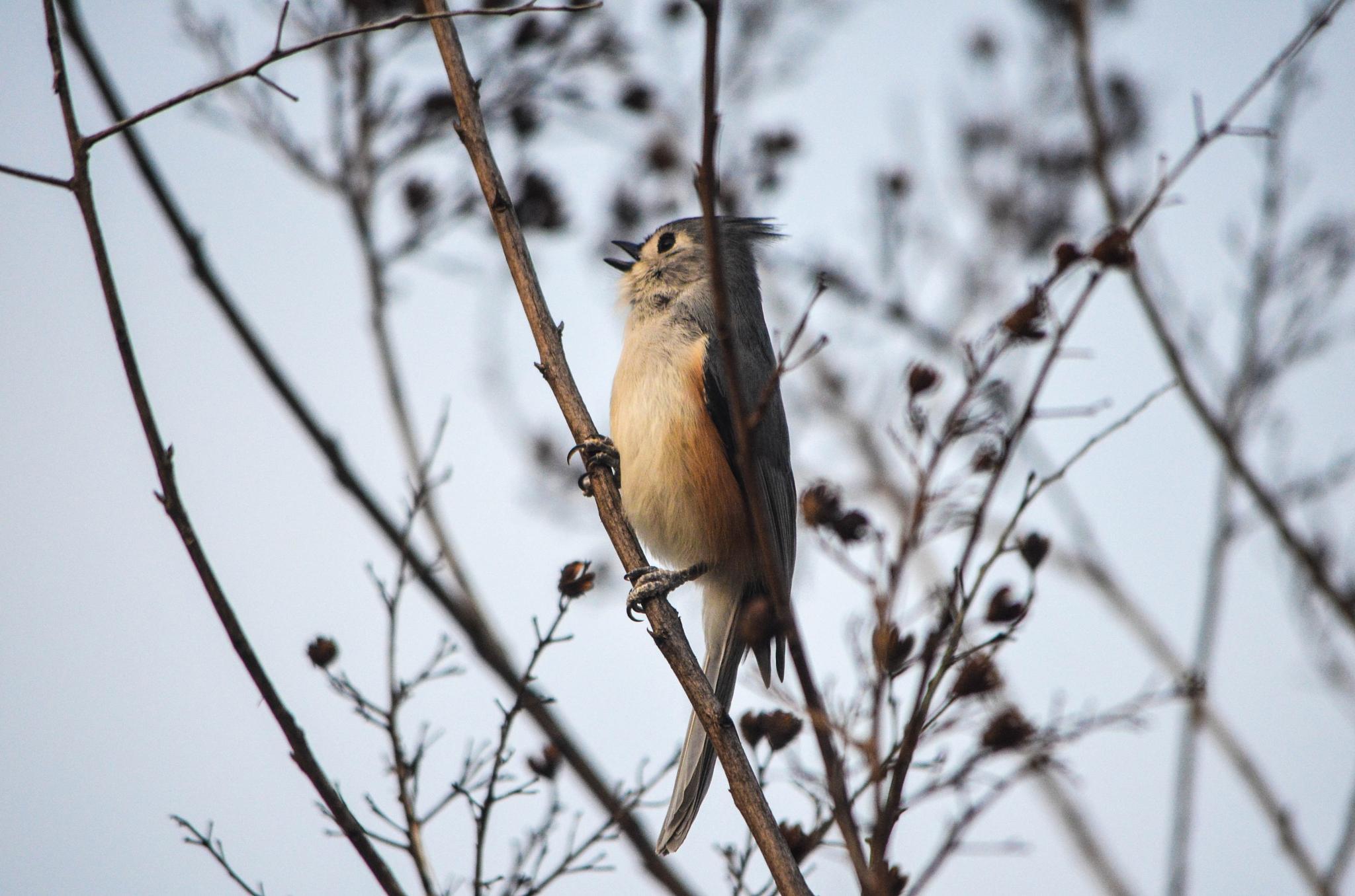 Just singing away!!   by kathy.herriottmeyers