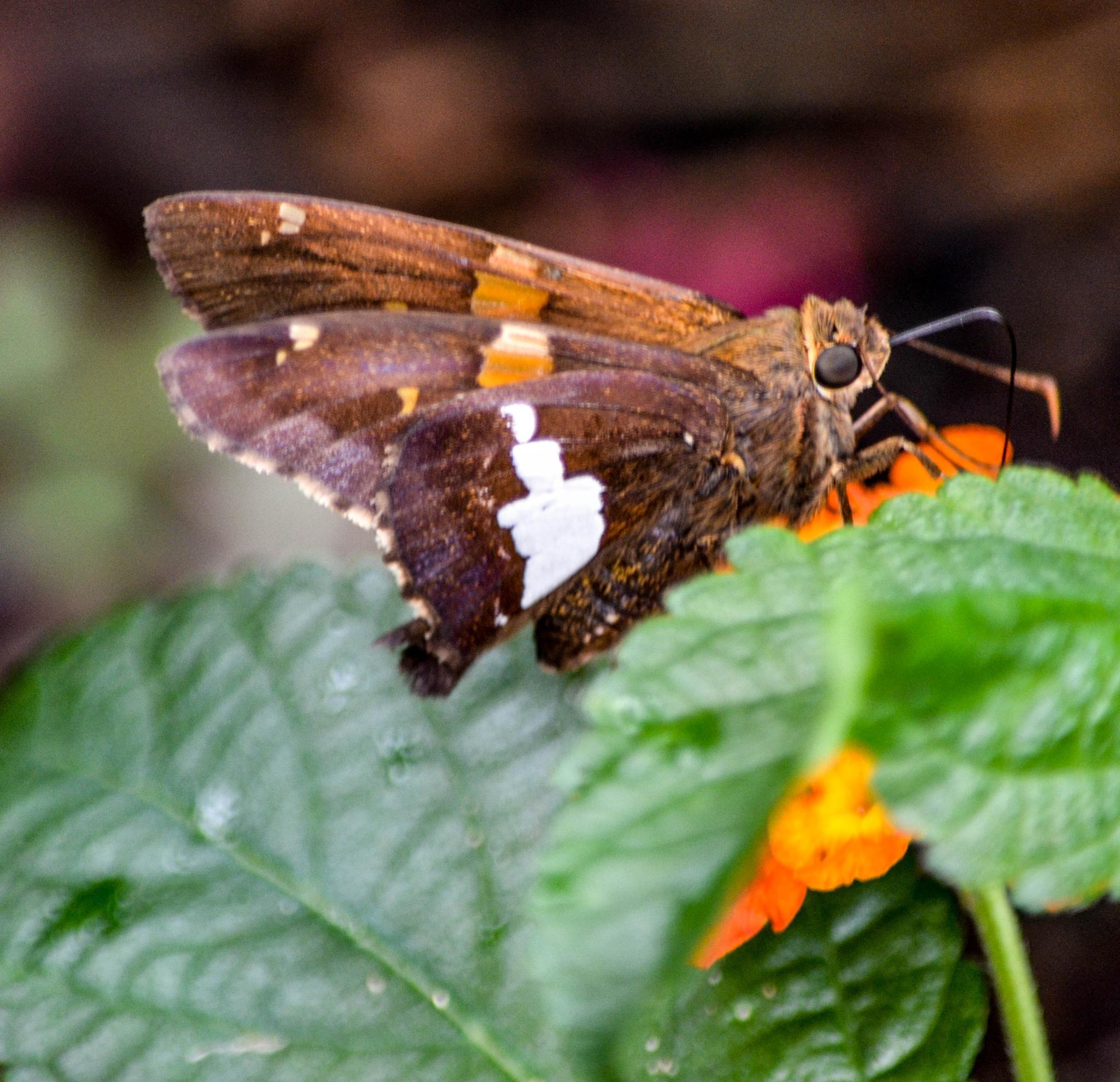 Moth!   by kathy.herriottmeyers