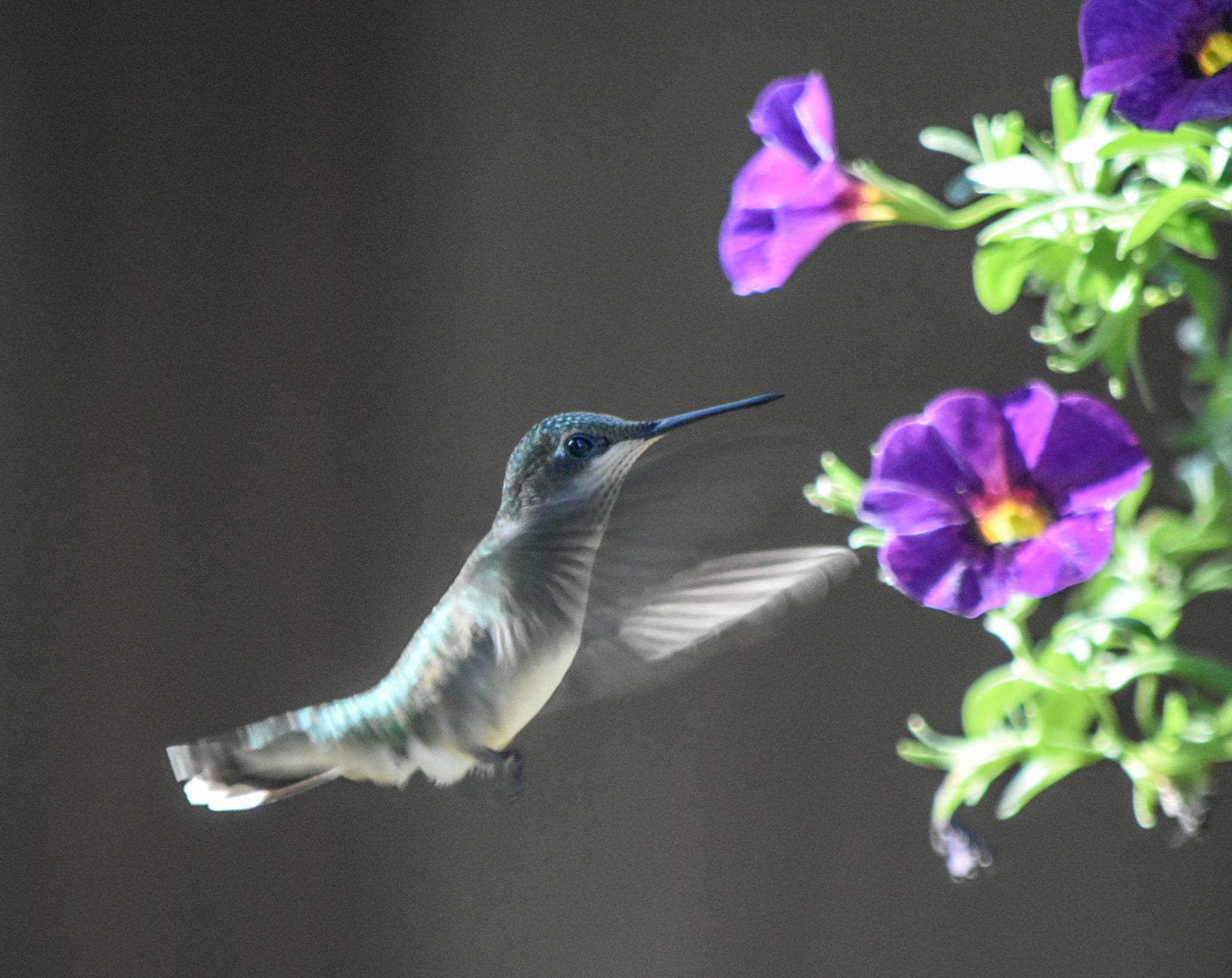 Humming Bird!  :)   by kathy.herriottmeyers