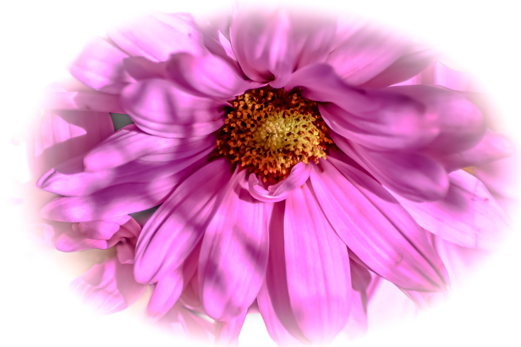 Pretty in Pink!!  :)   by kathy.herriottmeyers