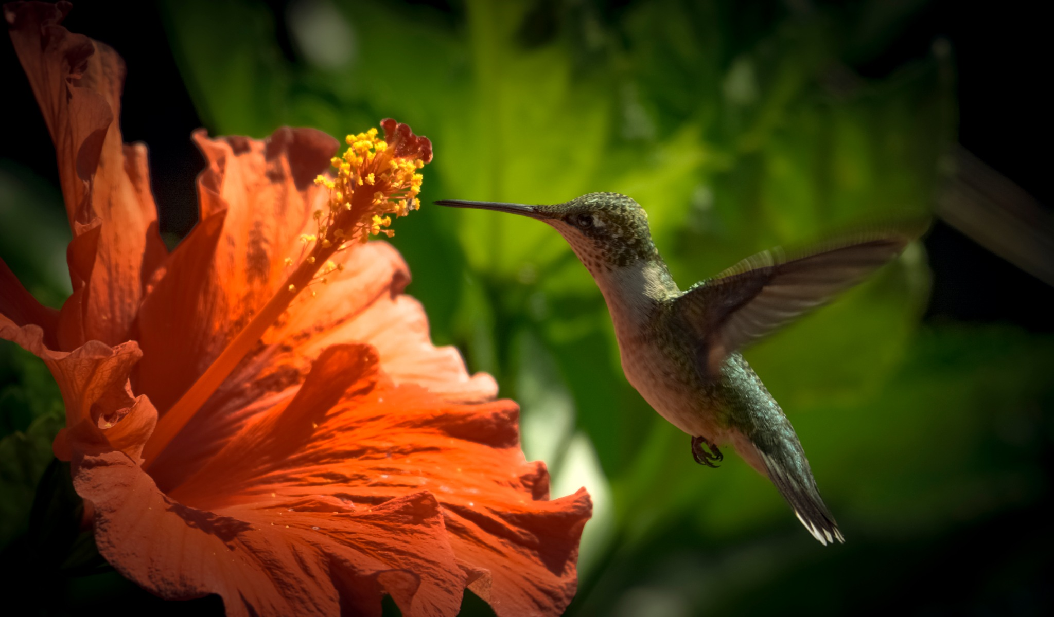 Coming In For The Hibiscus!  :)  by kathy.herriottmeyers