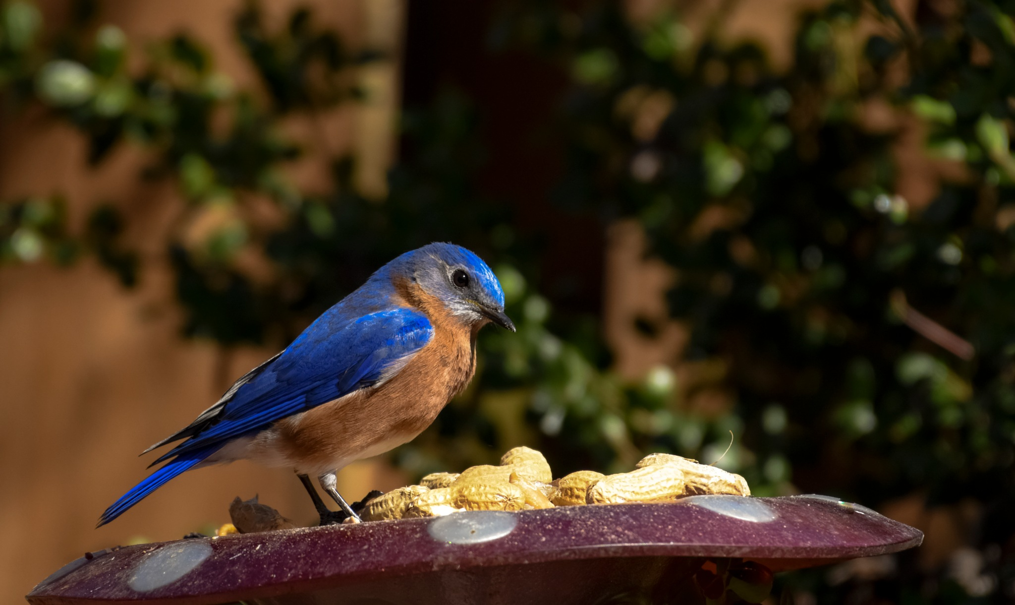 What?  This is Blue Jay Peanuts!!   by kathy.herriottmeyers