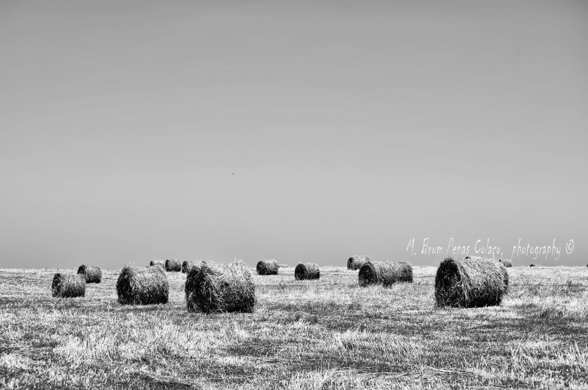 ALENTEJO, land of My Soul by Brum_Colaco