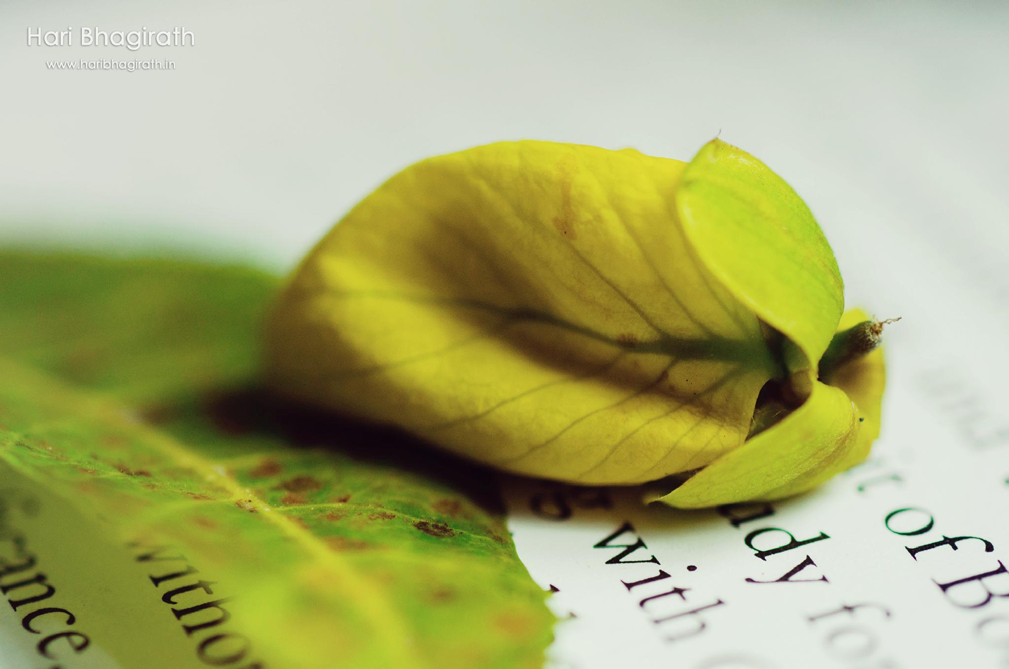 Turn the Page by Hari Bhagirath