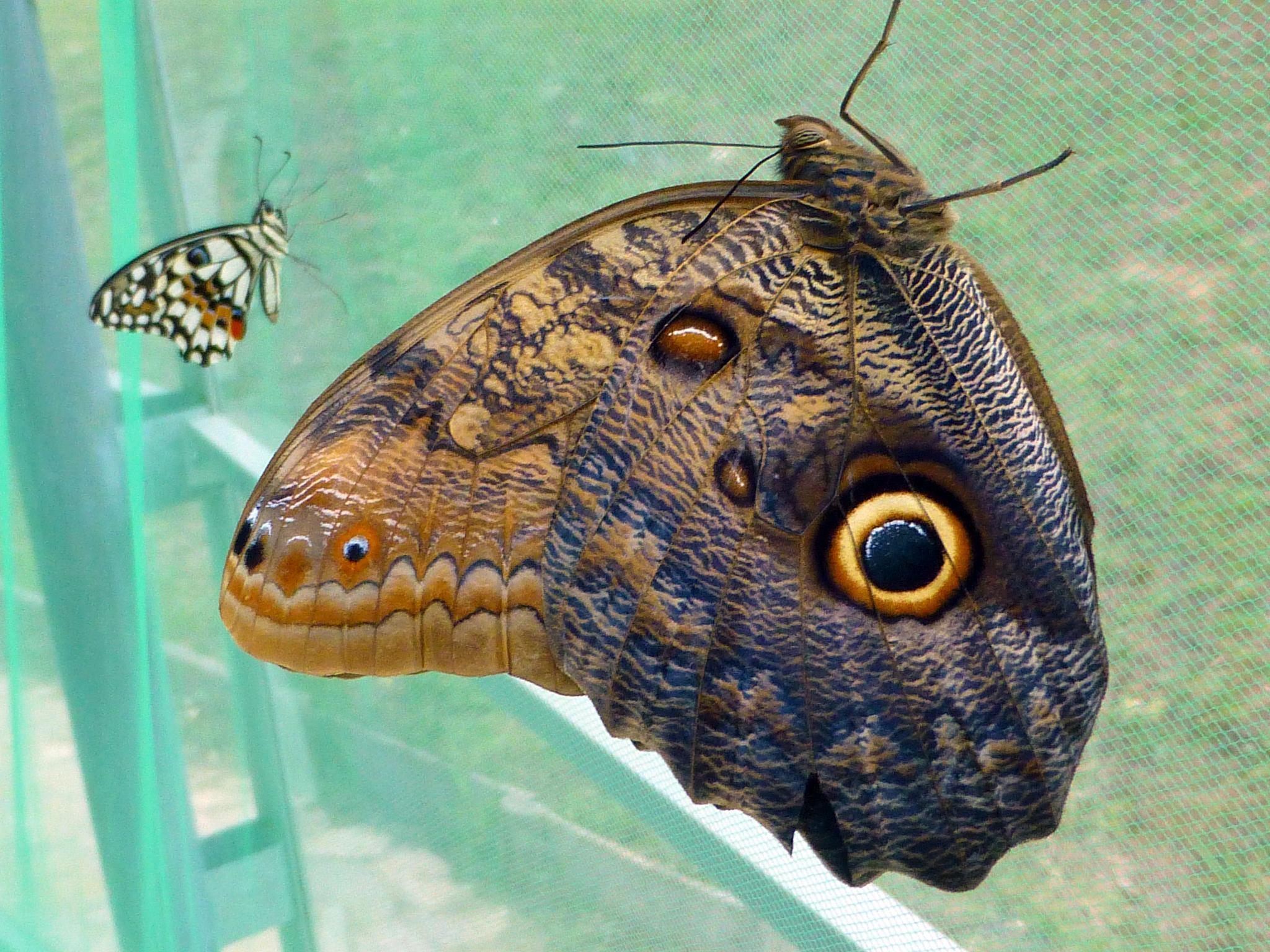 butterflies by peppe953