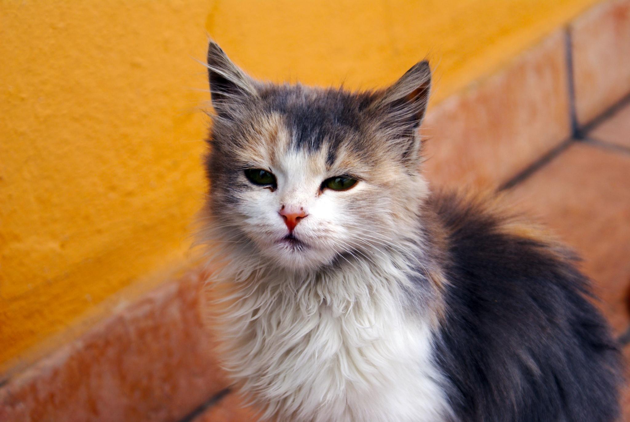 kitten by peppe953