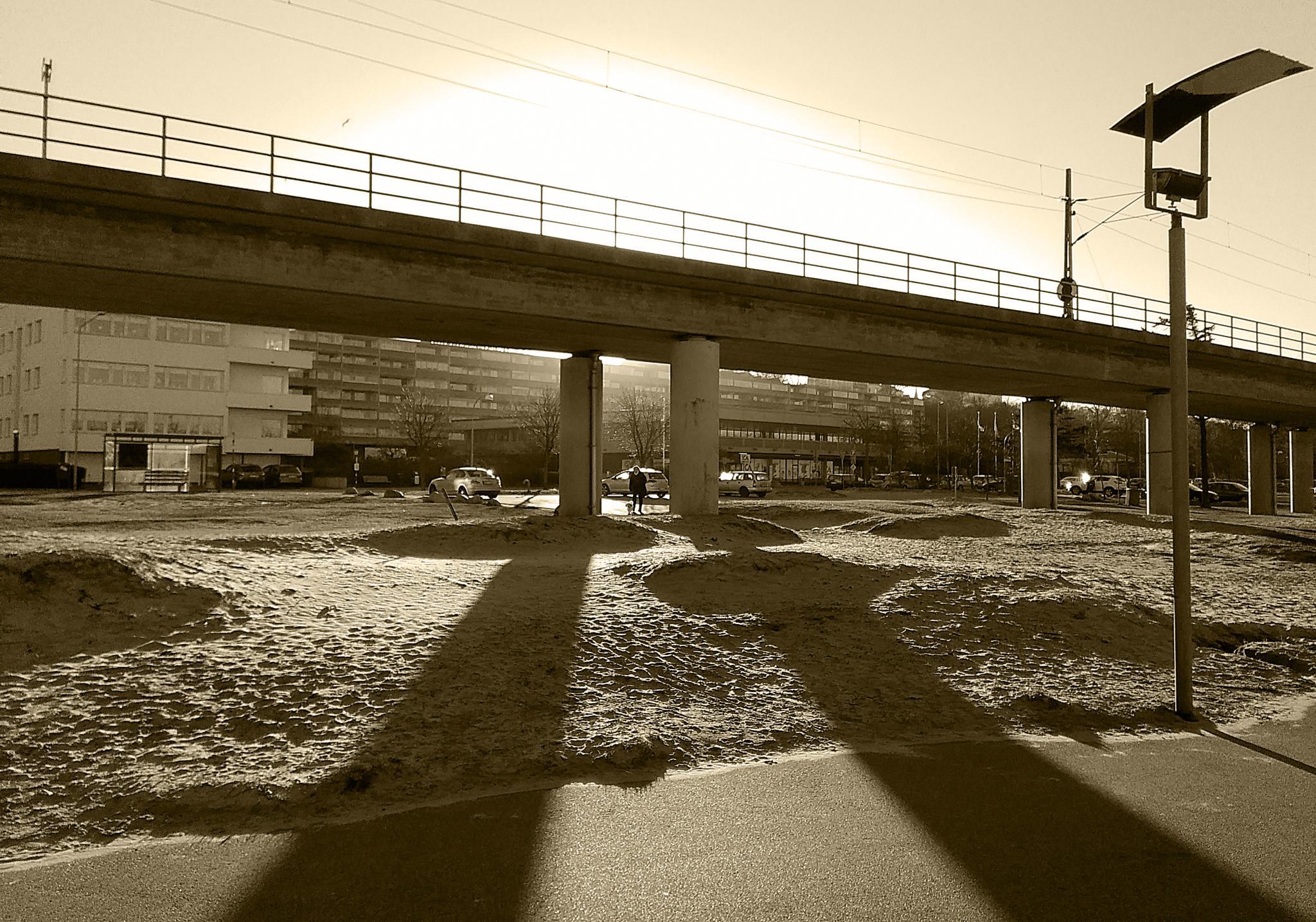 Morning Light by Freddy Olsson