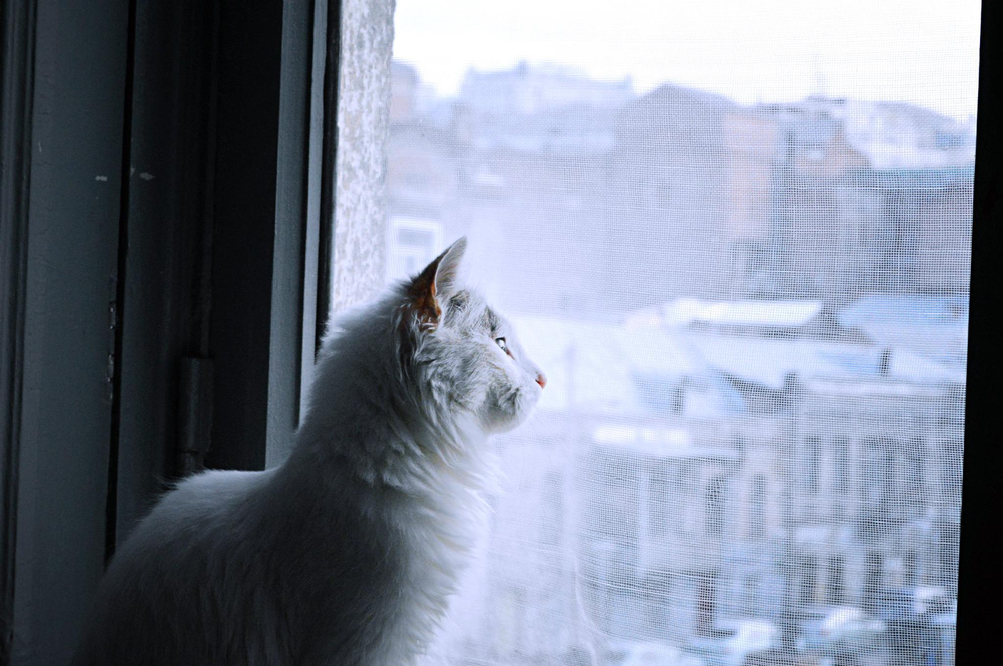 My Cat Mao <3 by Tamar abdushelishvili photography