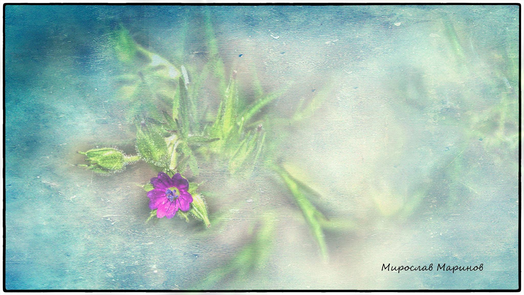 Sensuality by Miroslav.Marinov
