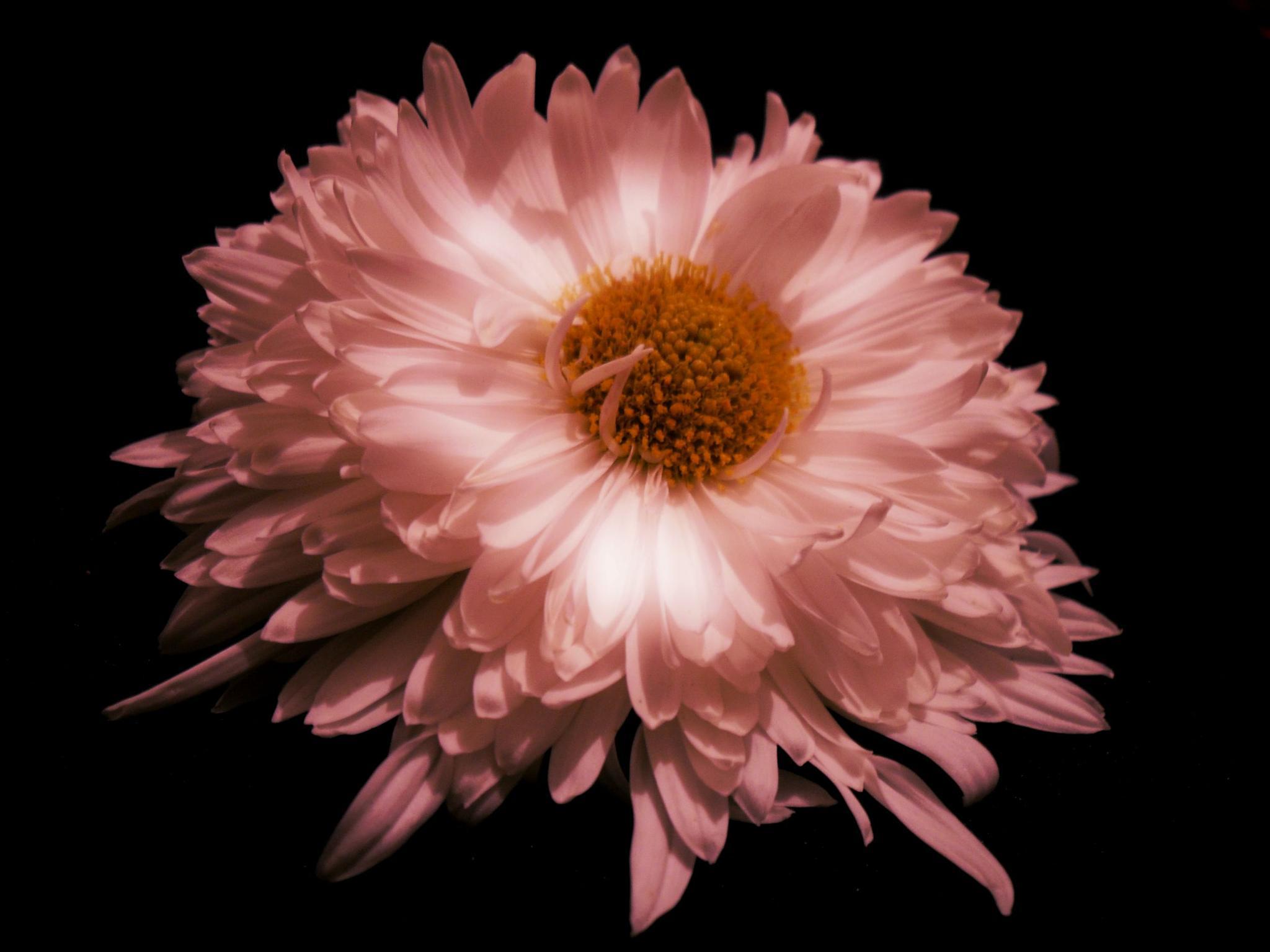 Flower by KrasiDimitrova