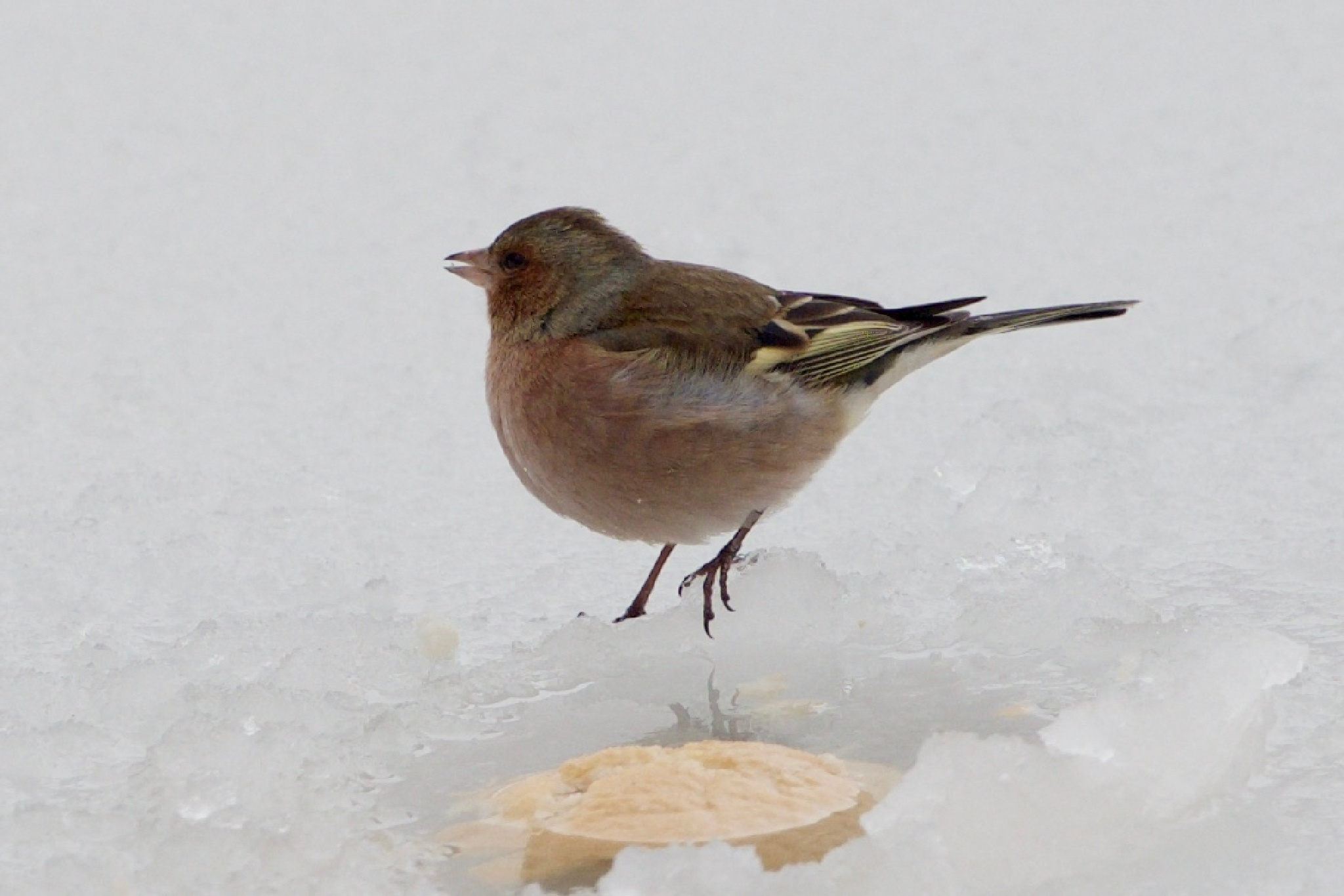 Bird by Nikolay Todorov