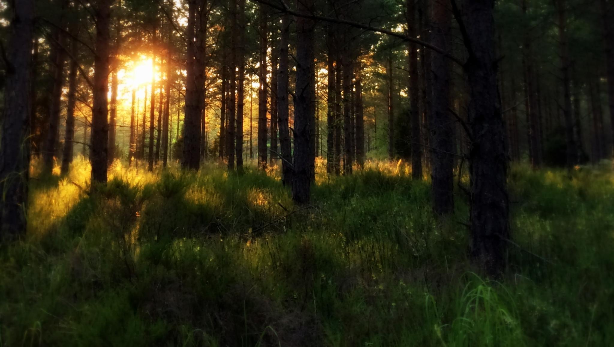Photo in Landscape #wheelchair #stroll #woods #sun #trees