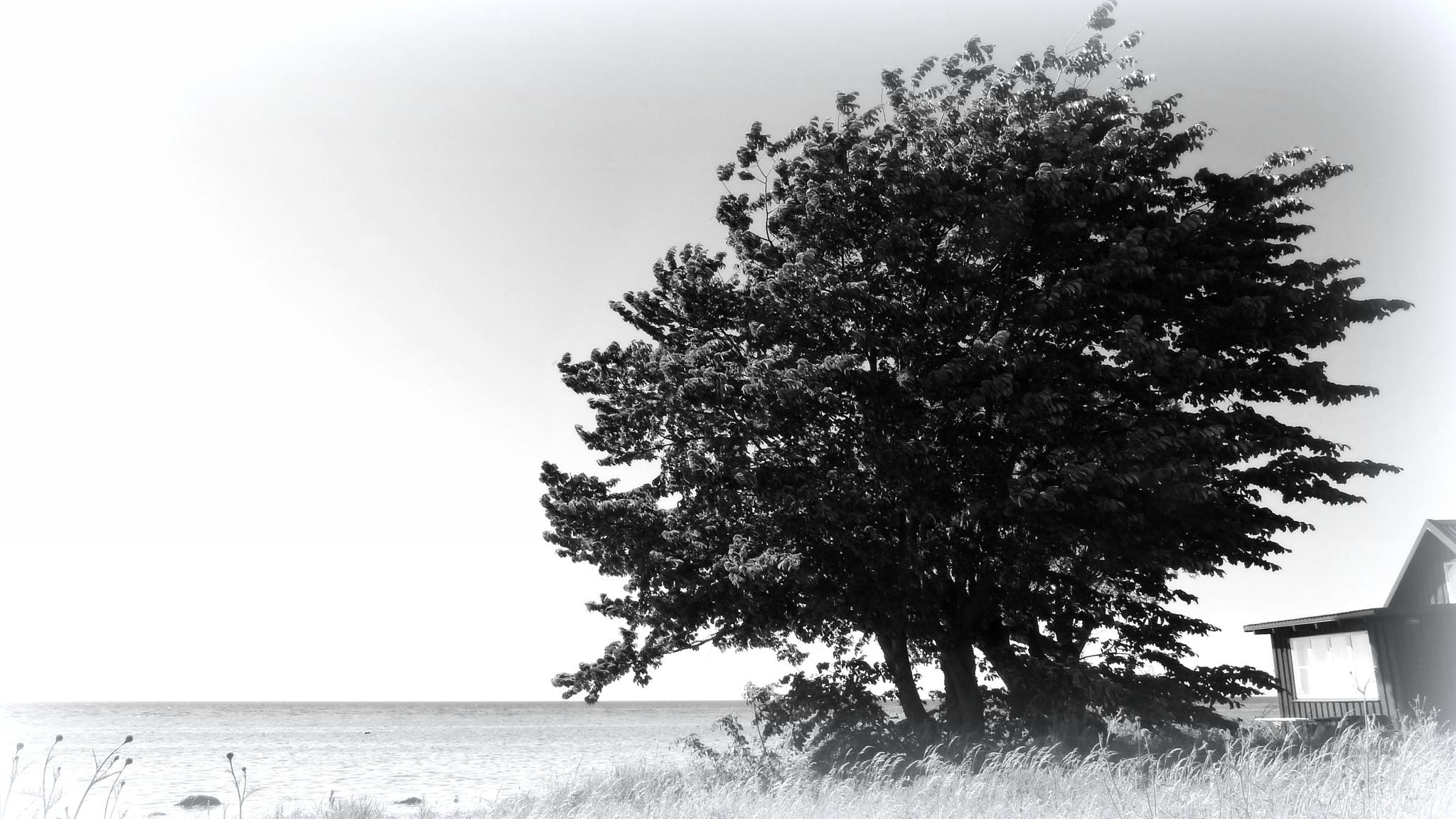 Sunlight in black and white by maja.e.olin