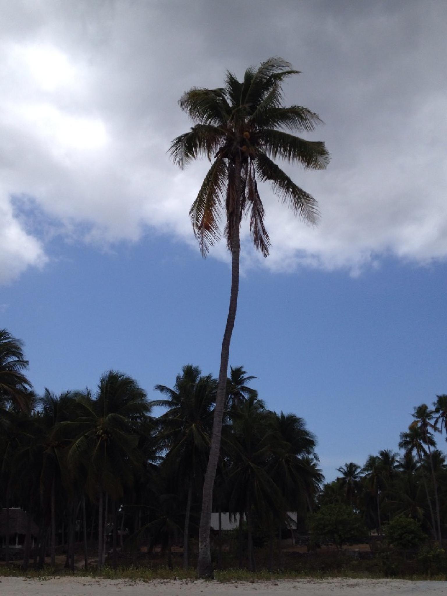 Alone, Rote island, Indomesia. by grossiroma