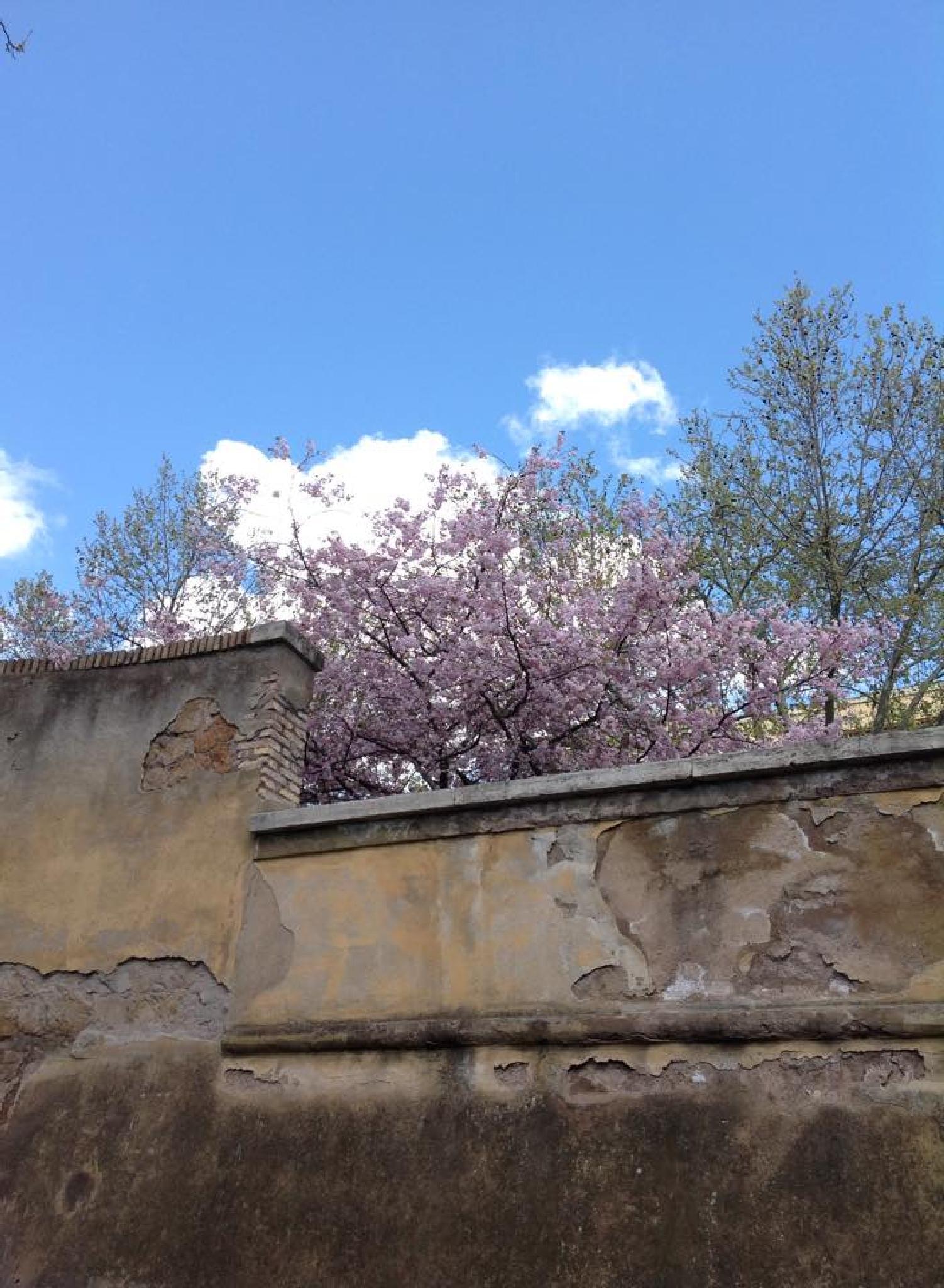 Springtime by grossiroma