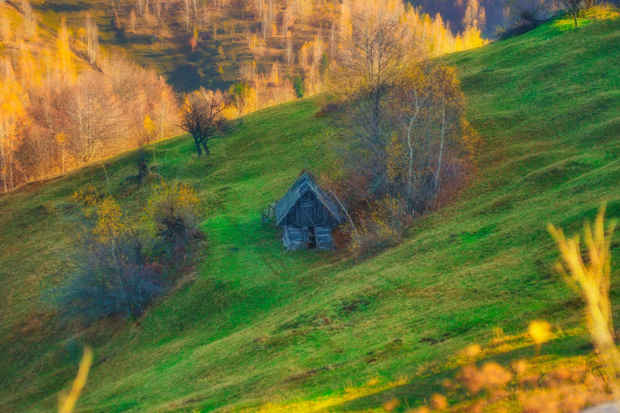 house by colisniuc sorin-valerian