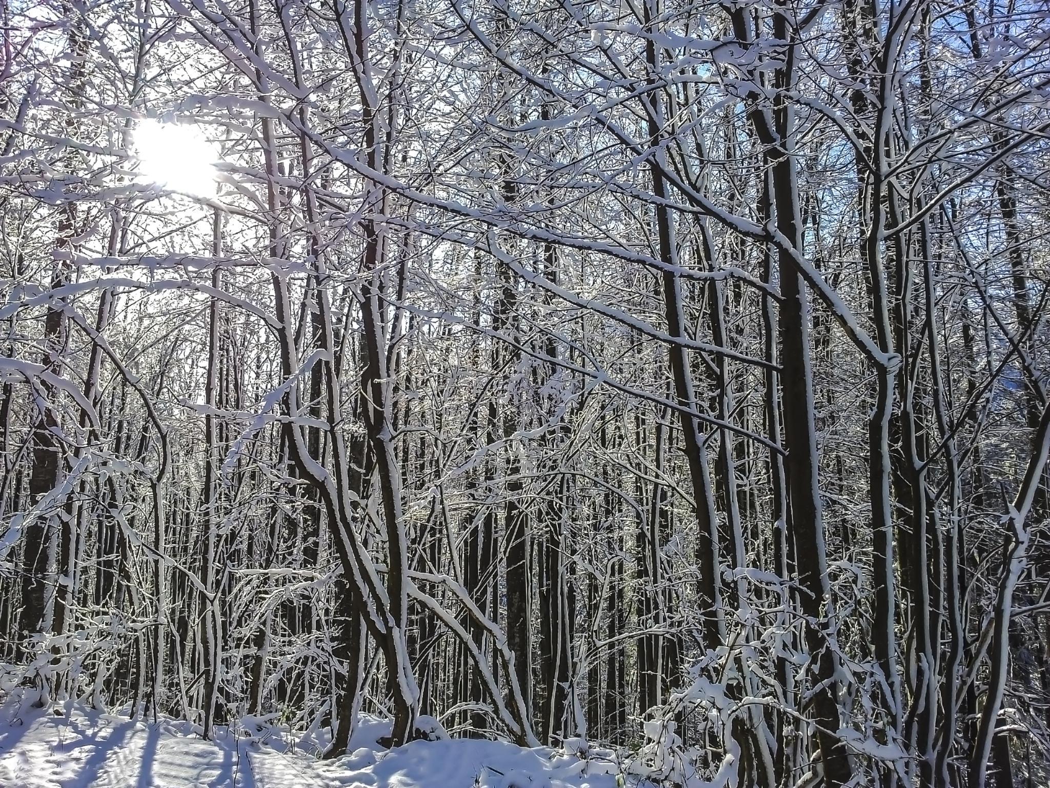 snow by colisniuc sorin-valerian
