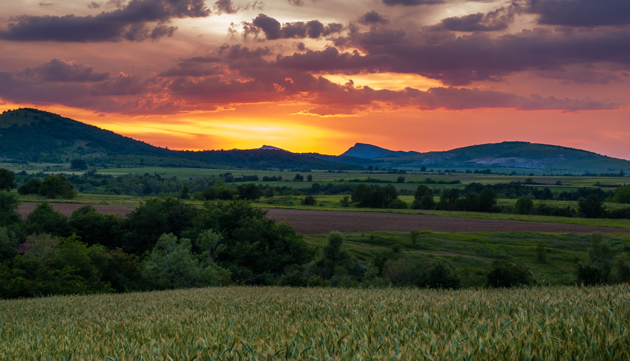 Photo in Landscape #landscape #landscapes #field #wheat #sunset #colorful #sky #nikon #bulgaria