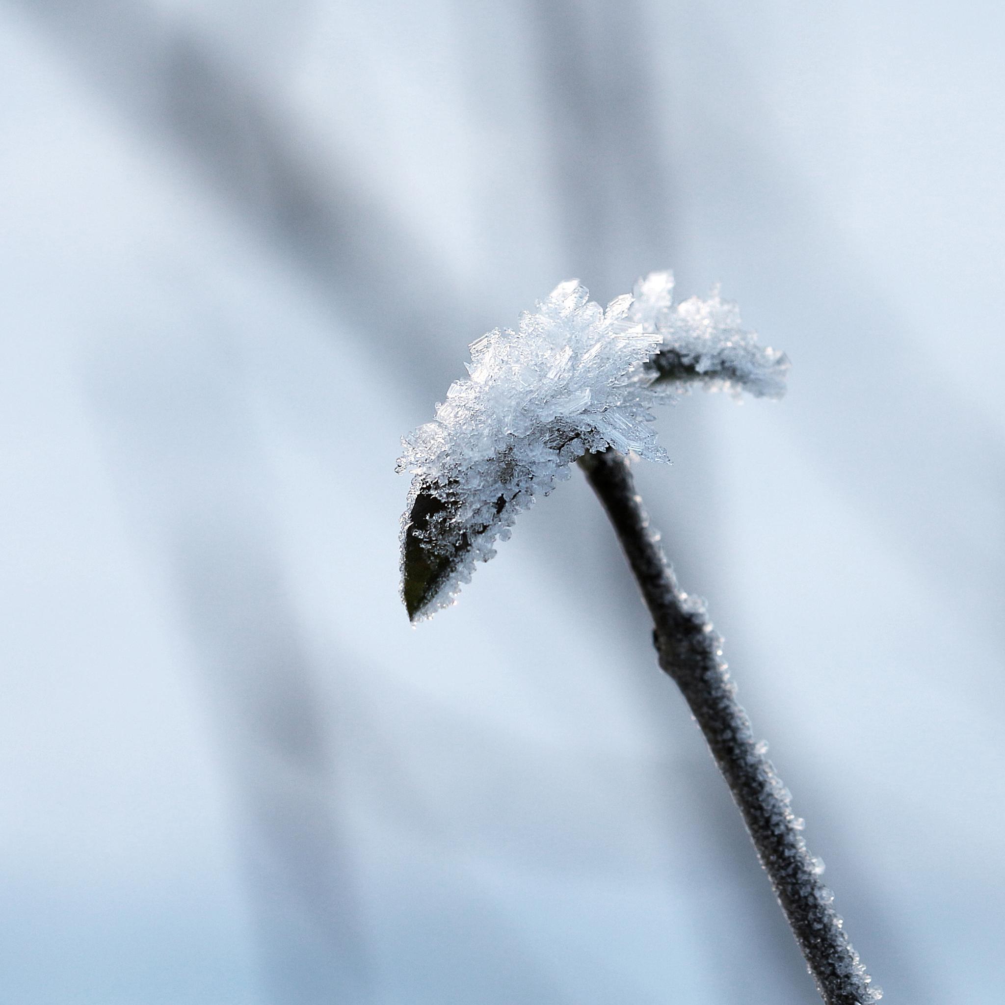 Frozen by kicki.odin