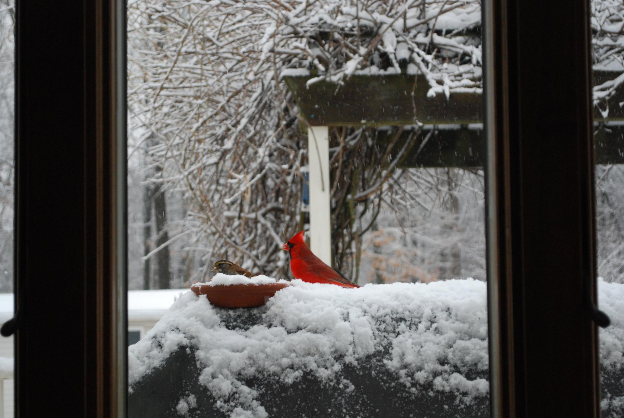 At the feeder during the snow storm by kathi.britske