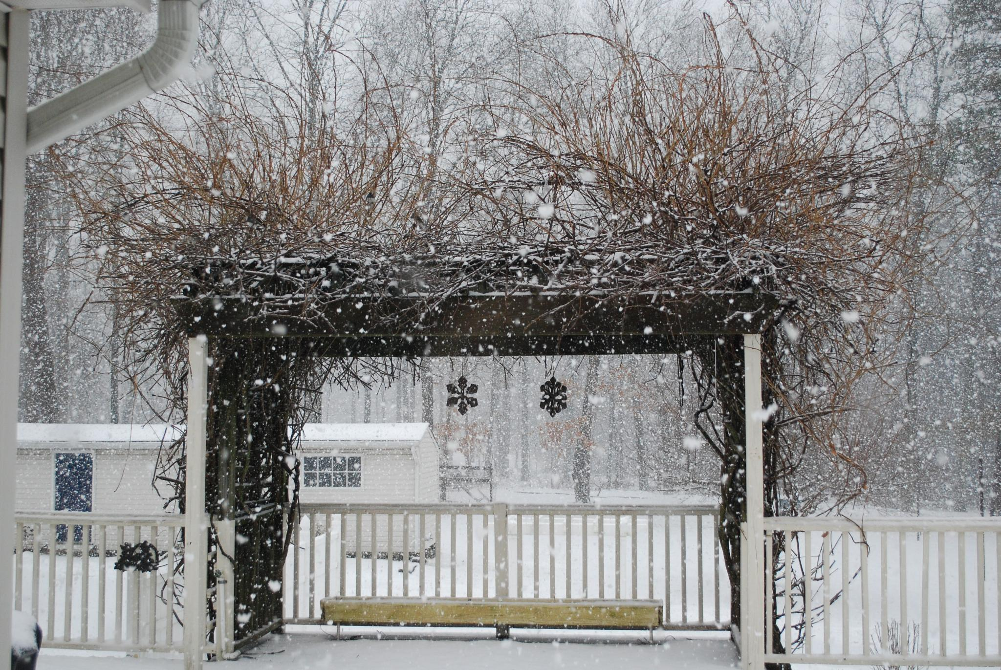 Jumbo Snow Flakes on the pergola, Jackson NJ by kathi.britske