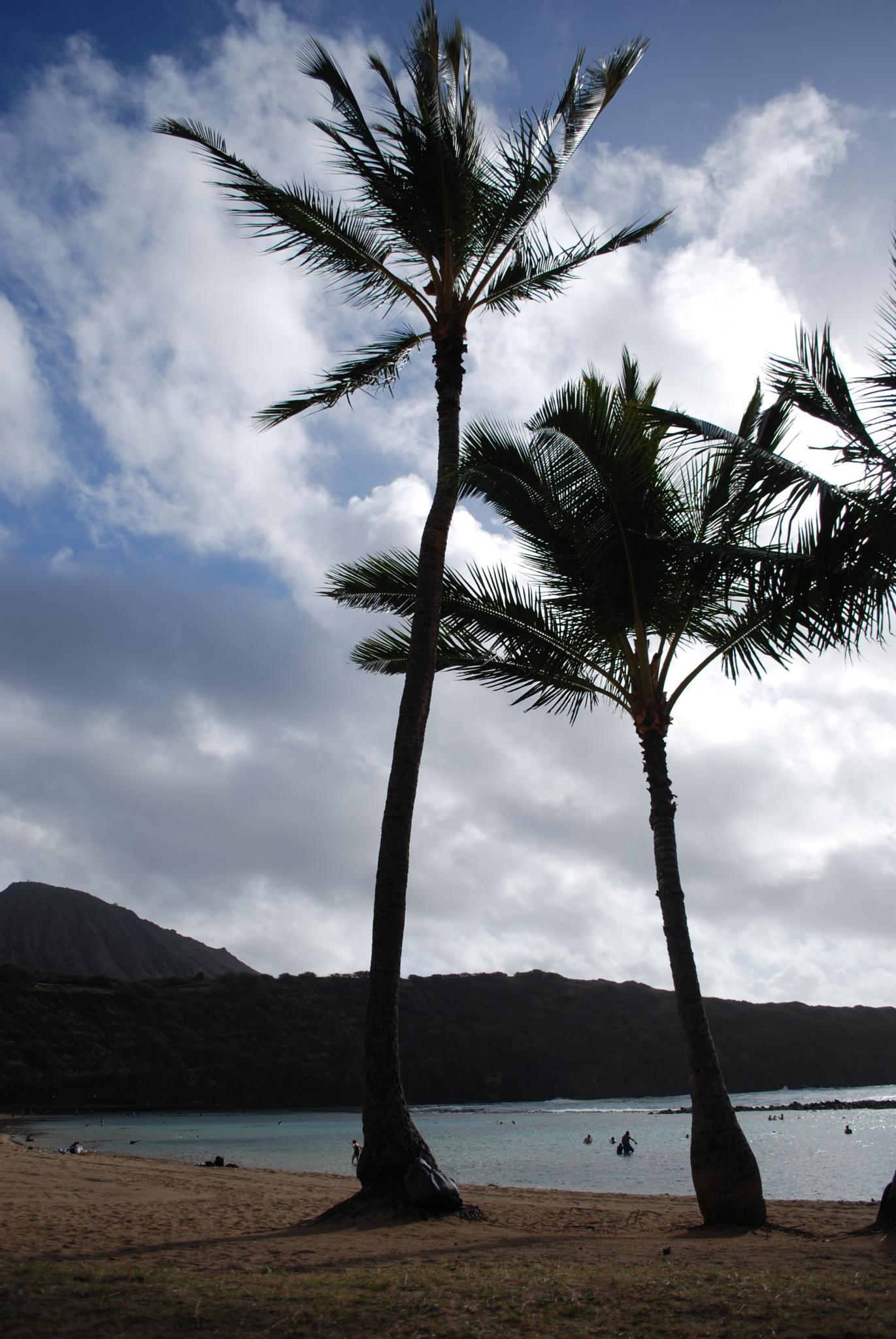 Waikiki Beach, Oahu by kathi.britske