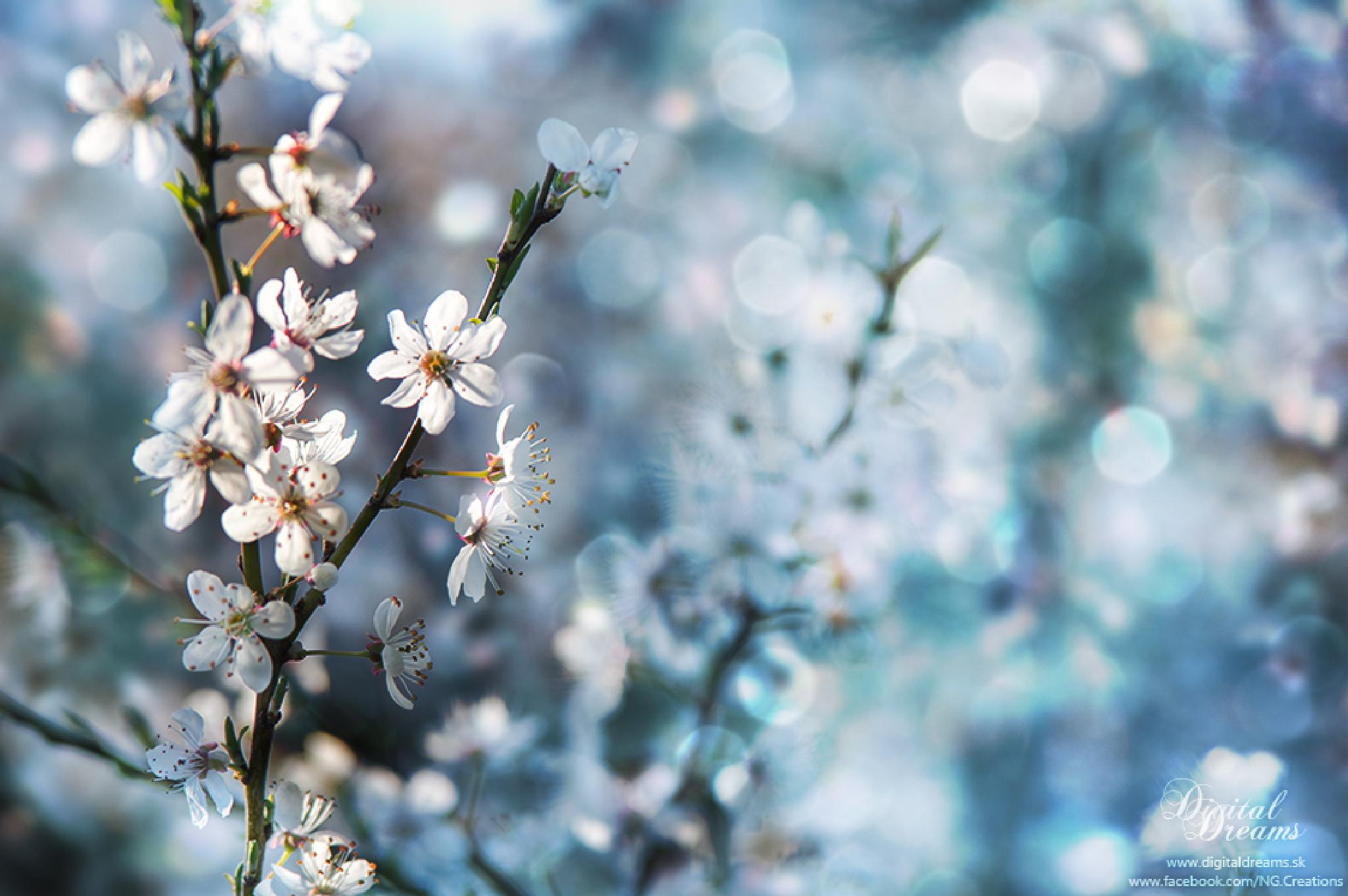 Spring and cherry by digitaldreams_sk