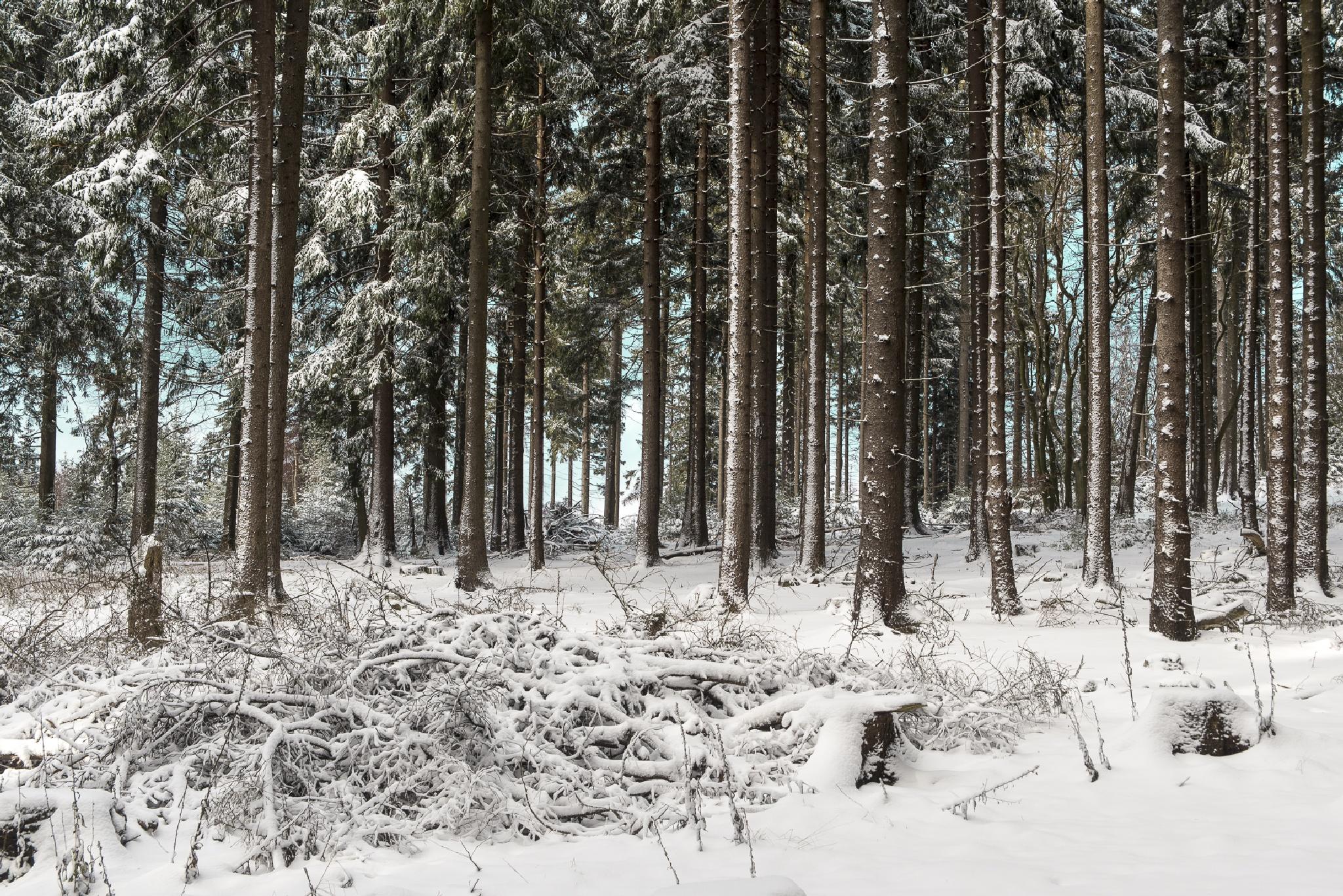 winter  by elu