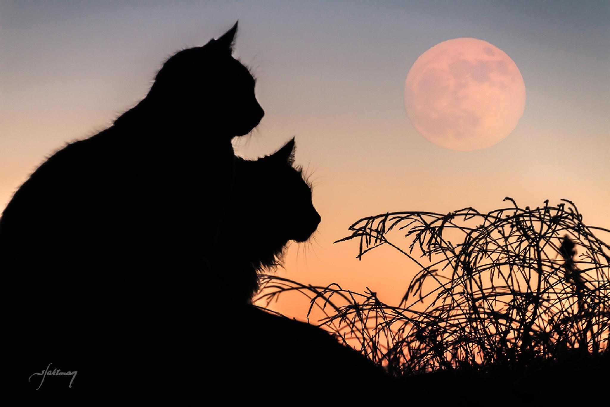 """I """"downloaded"""" the moon to the cats by Syssy Jaktman"""