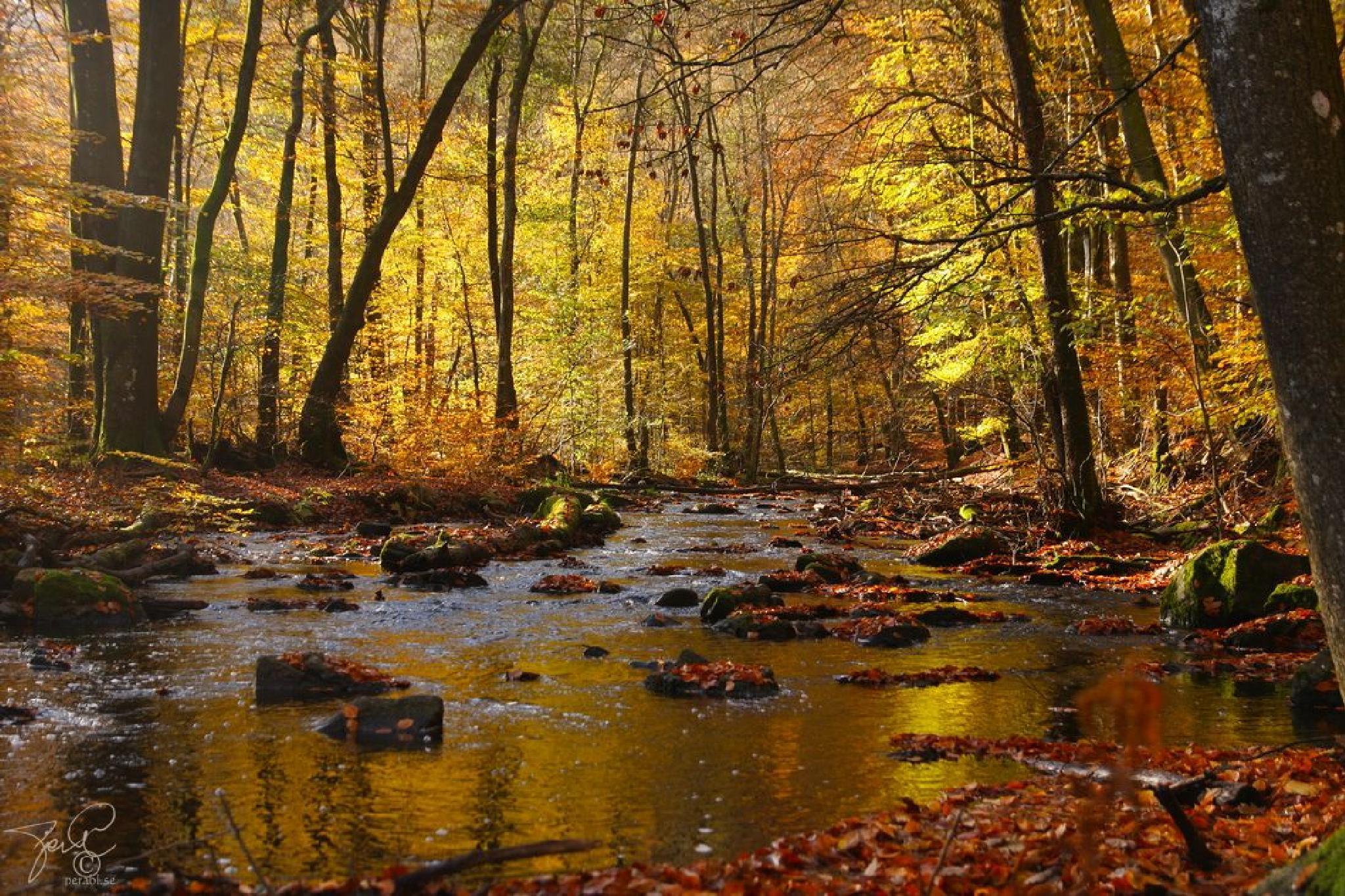 Autumn brook by Per Lindskog