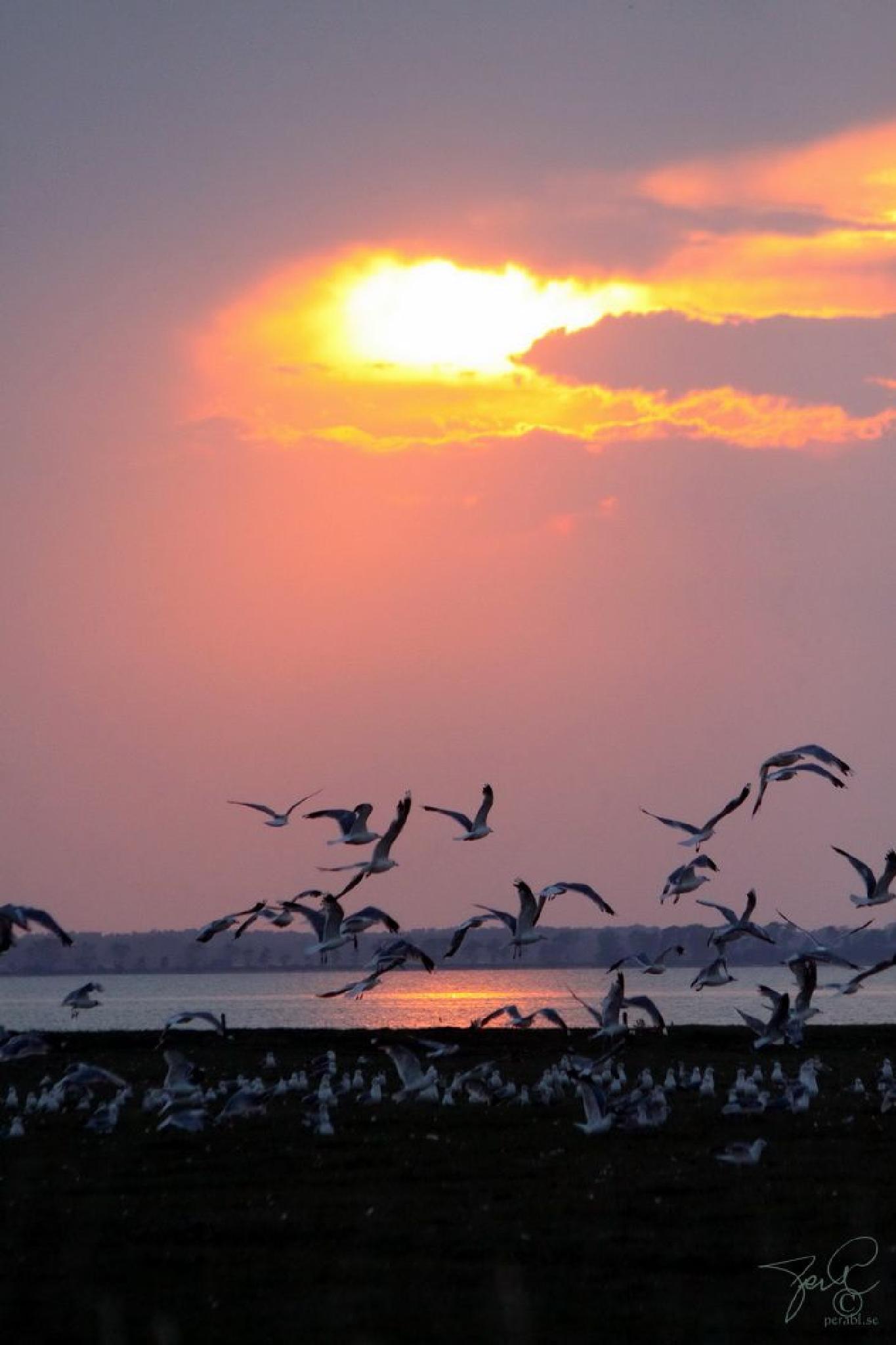 Sunset birds by Per Lindskog
