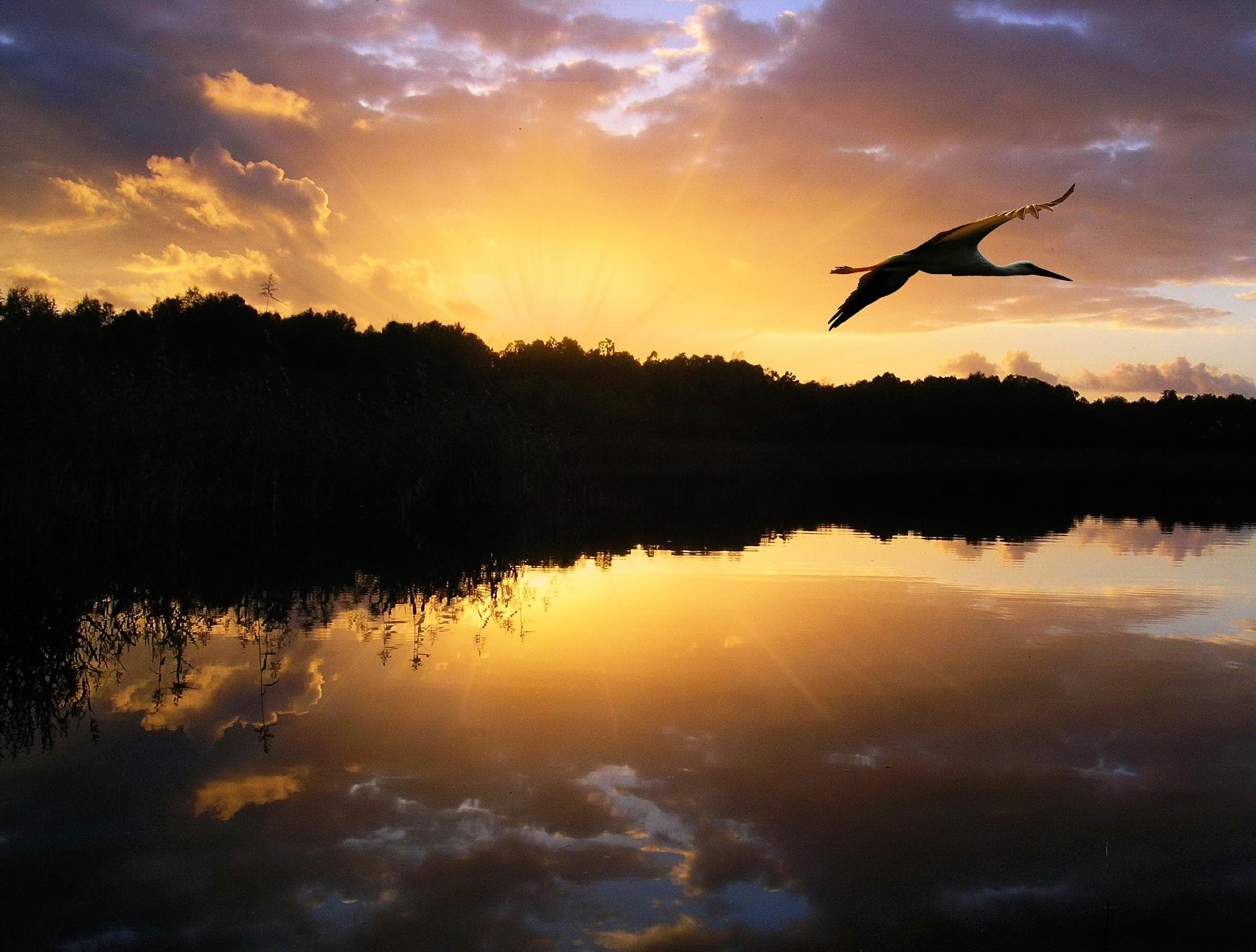 Sunset stork by Per Lindskog