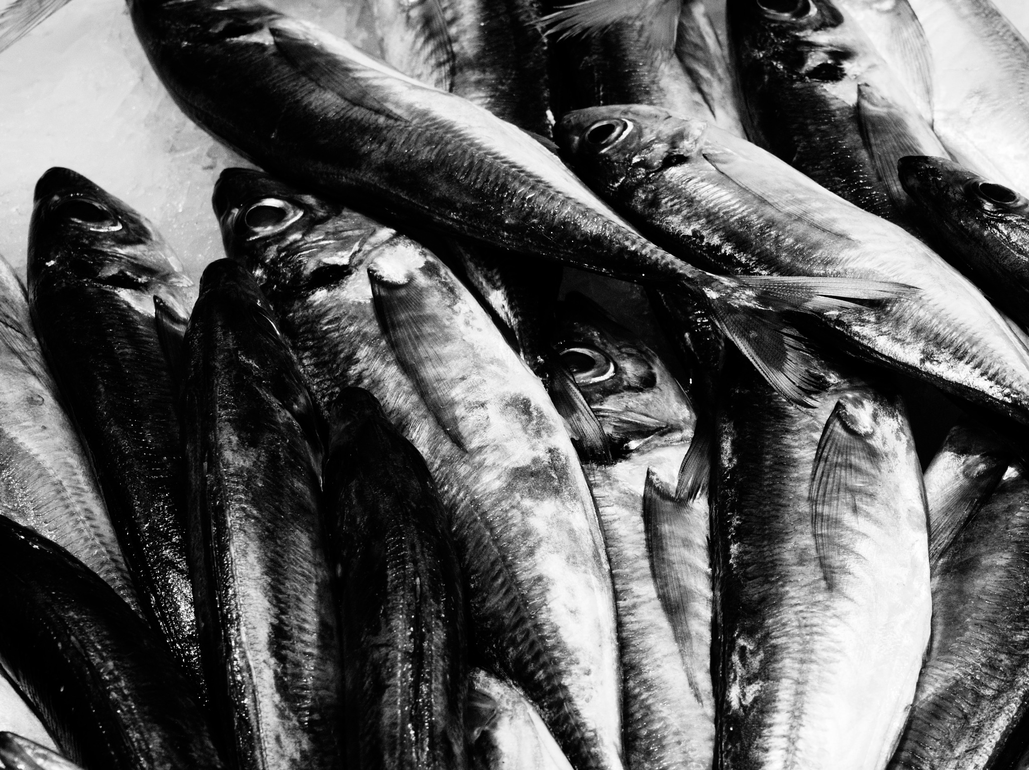 Fish by gabriele.zucchella