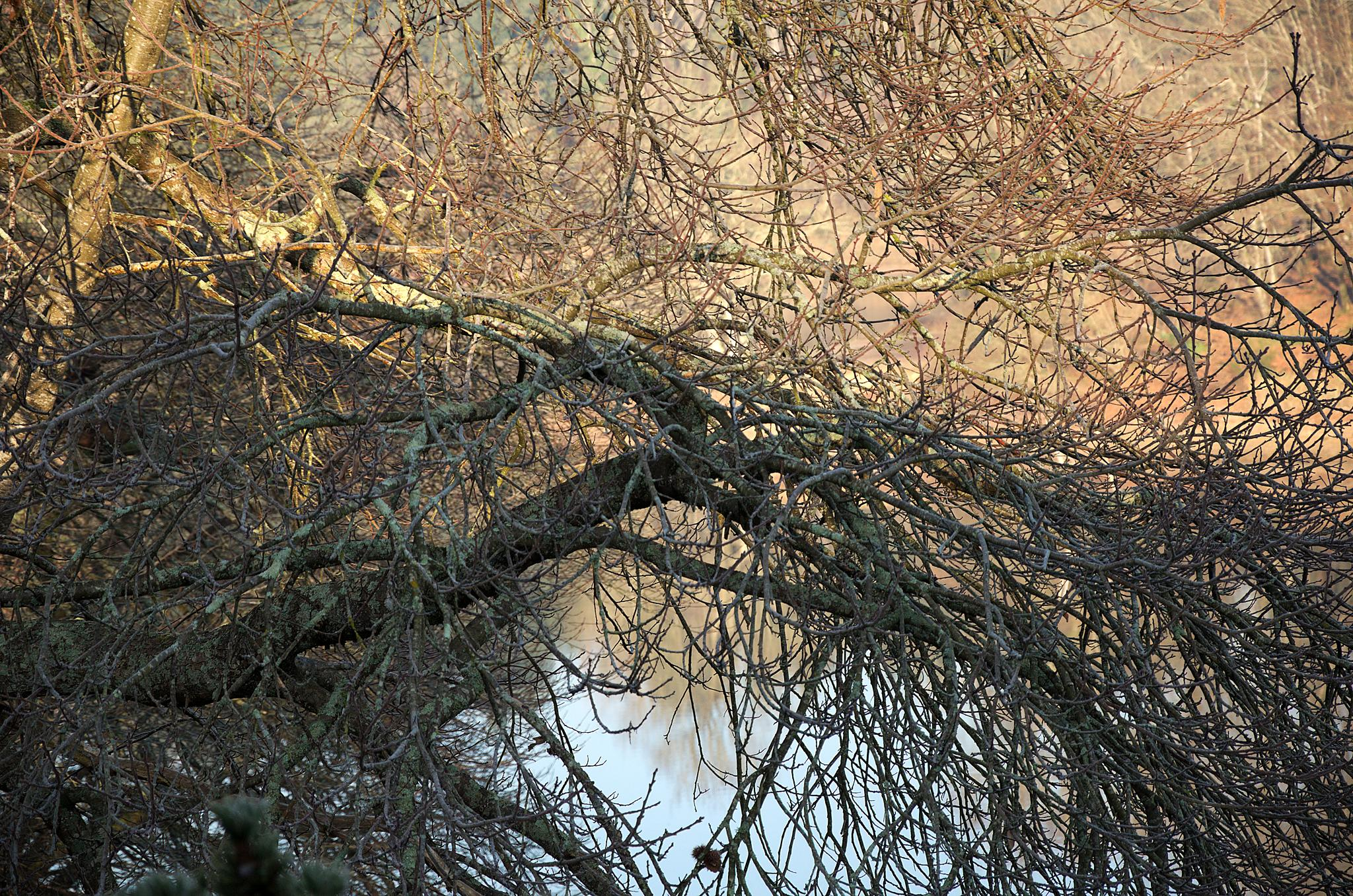 """""""Branches and reflections 07"""" by Isabel Saij"""