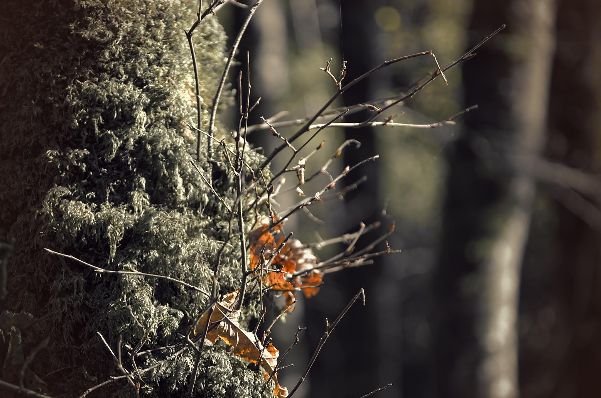 """""""Feuilles d'automne 03""""  -  """"leaves - autumn"""" by Isabel Saij"""